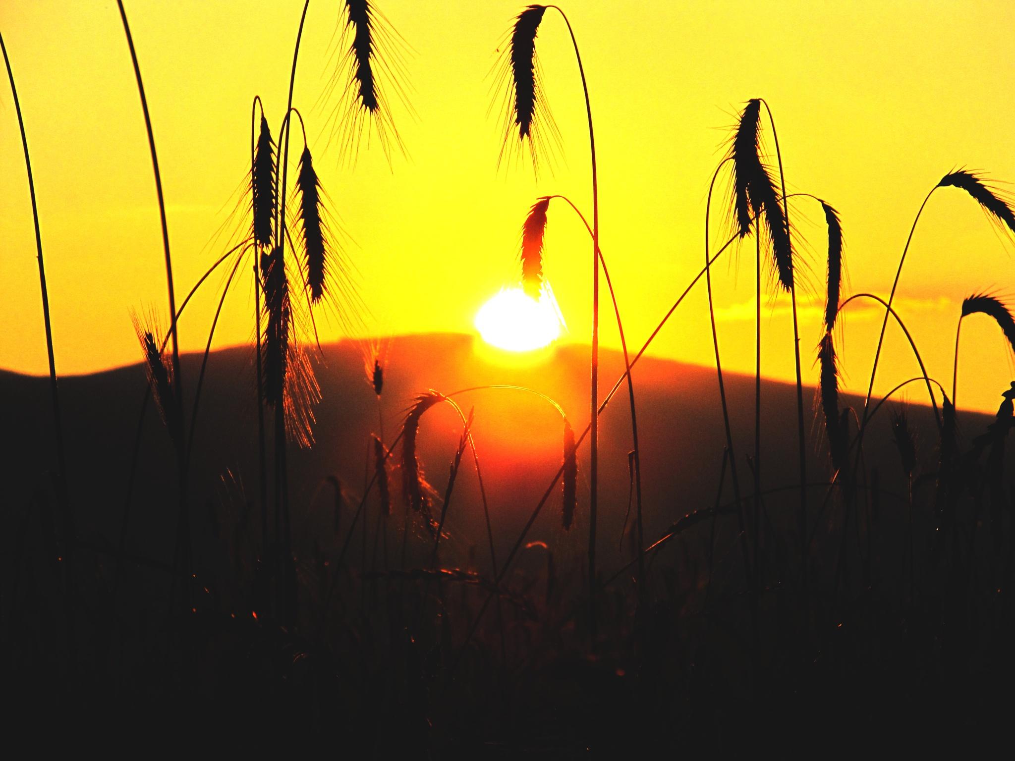 the sun always shines by Bence Nagy
