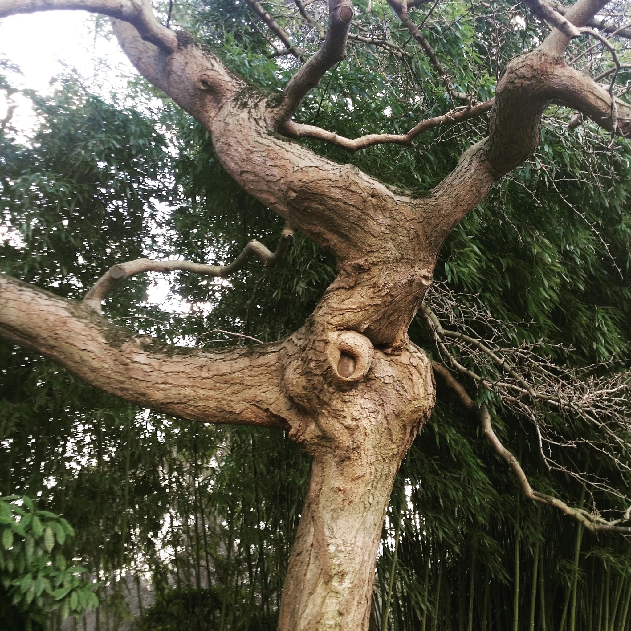 arbre du jardin d'Albert Kahn by Christophe LE COMTE