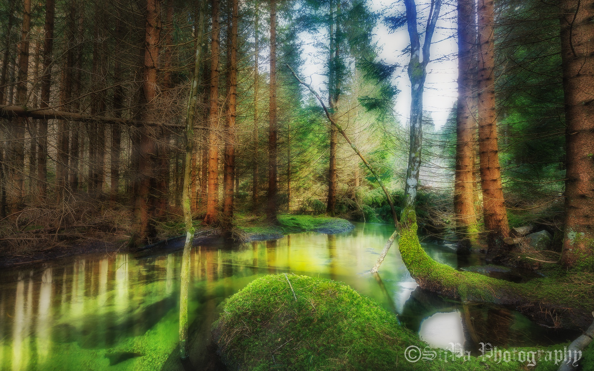A stream in a forest by StiPa Photography