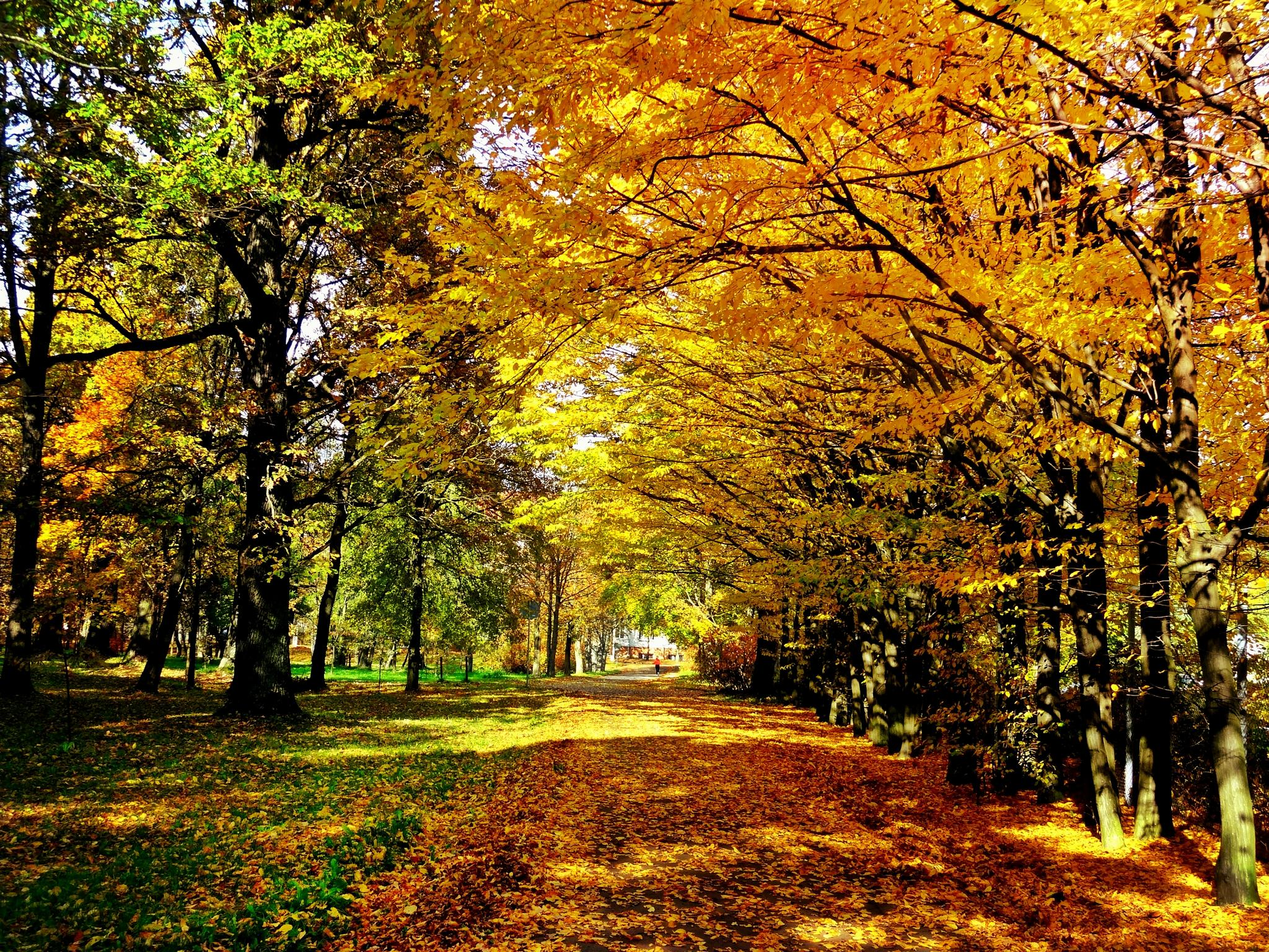 Photo in Landscape #autumn #fall #park #trees #nature