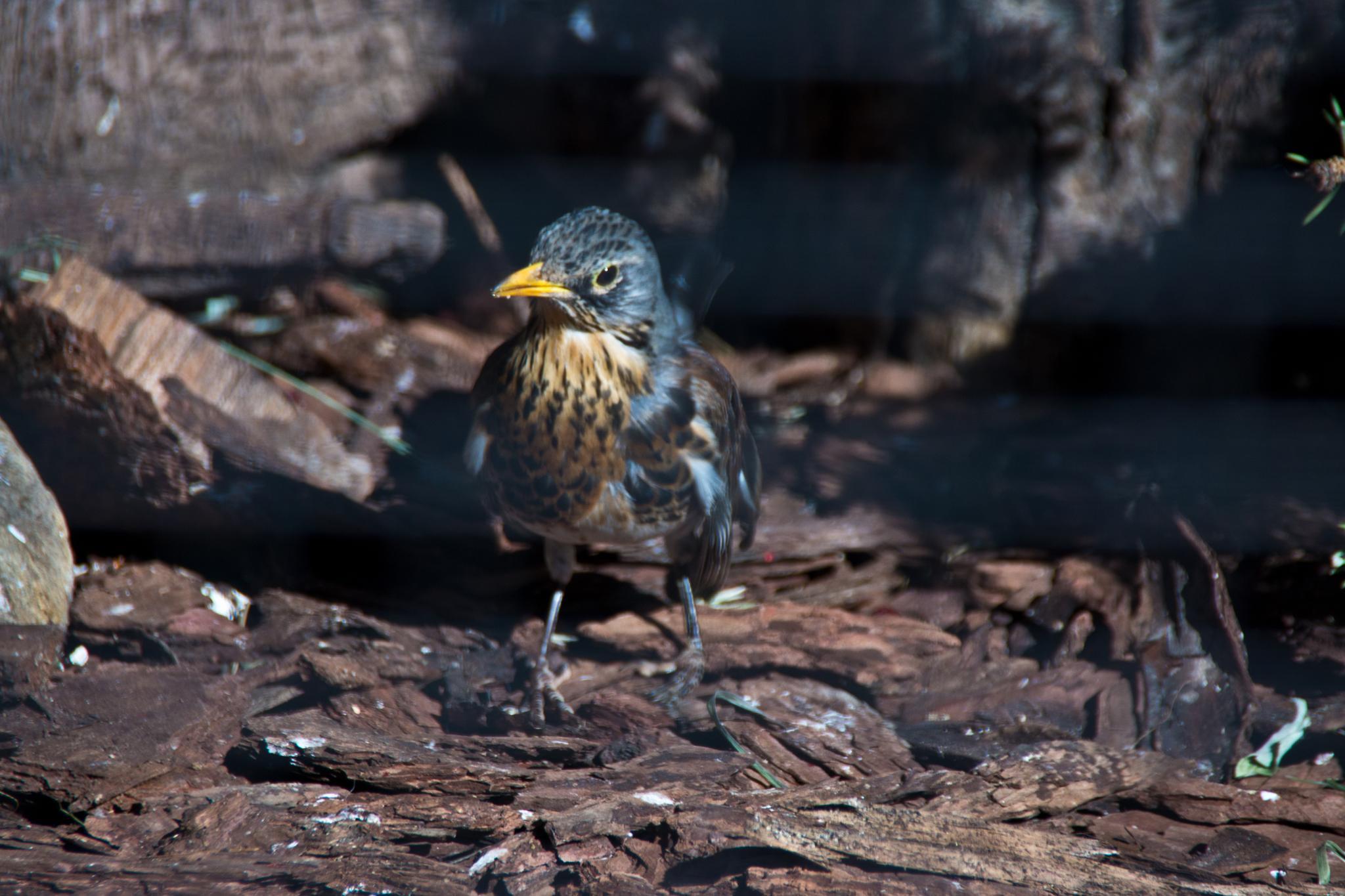 bird by Irina Shved