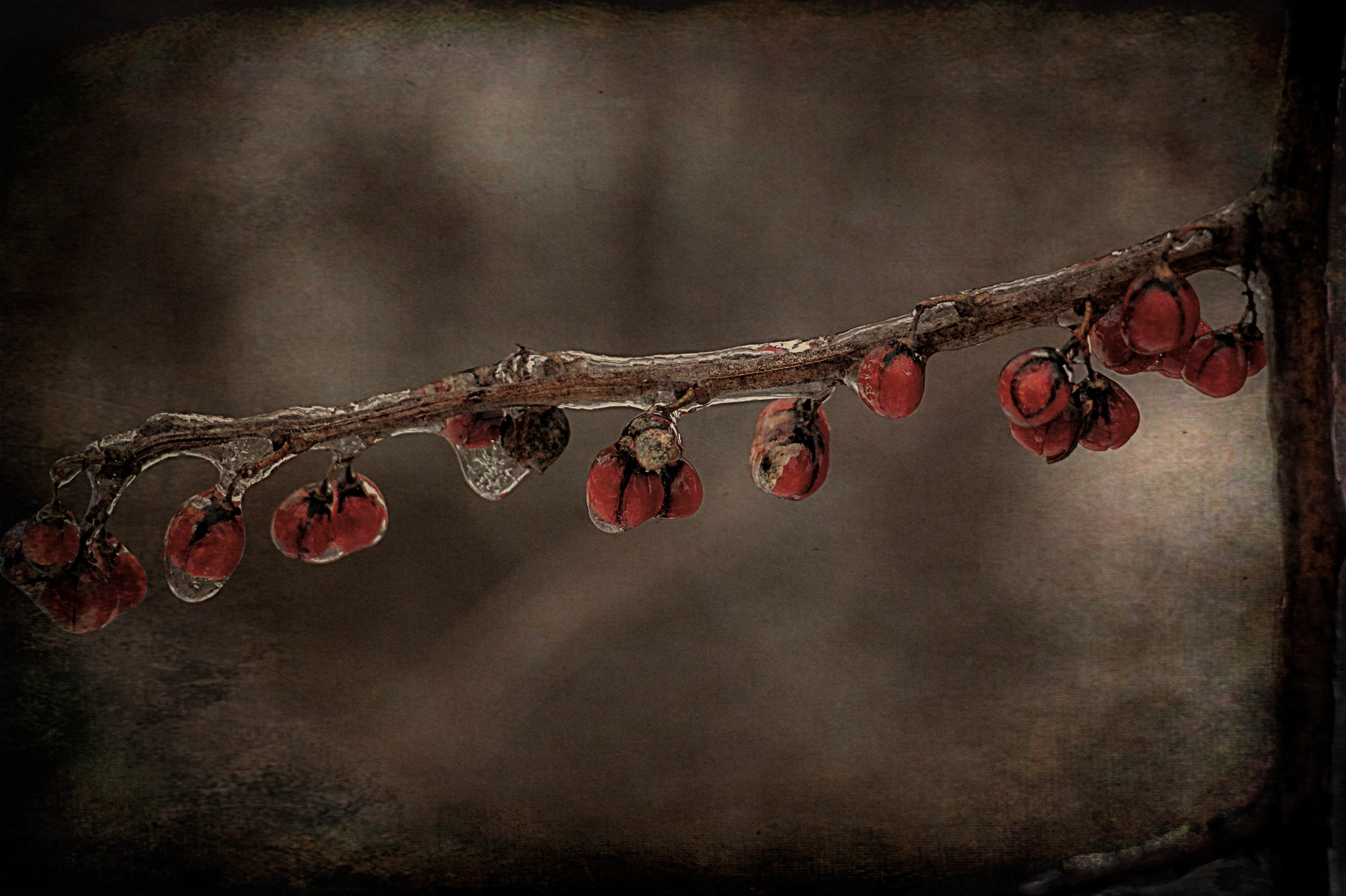 Photo in Vintage #red berries #ice #iced #glazed