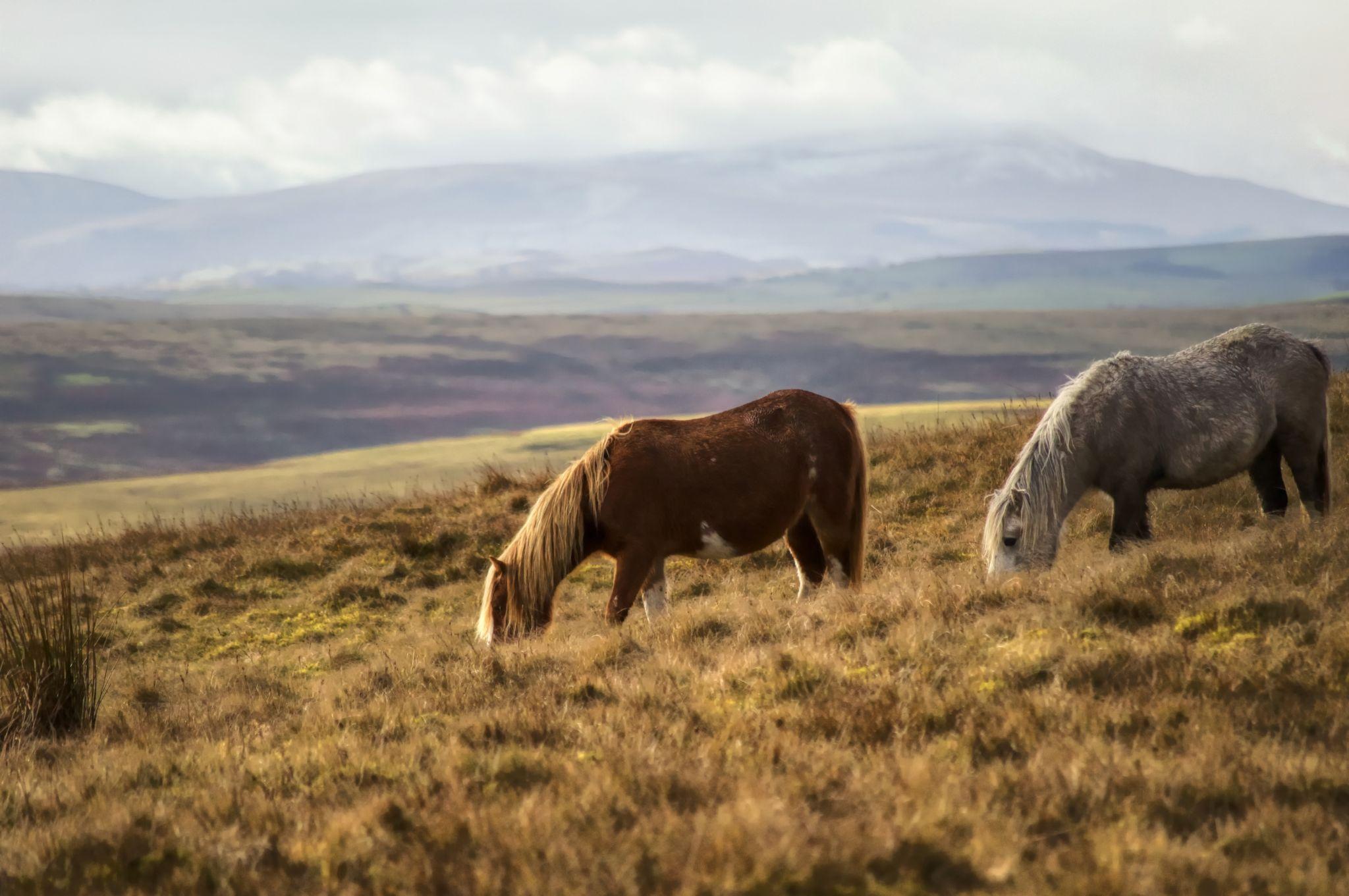 Wild Horses by Dominic Lemoine Photography