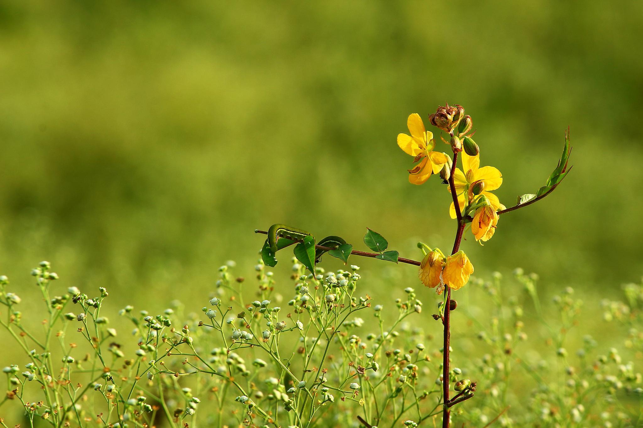 a wild plant and weeds by Ramesha.Samarpana