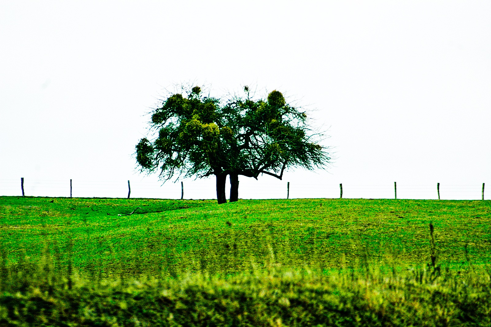 Photo in Nature #three #nature #lonely #green #art #artistic
