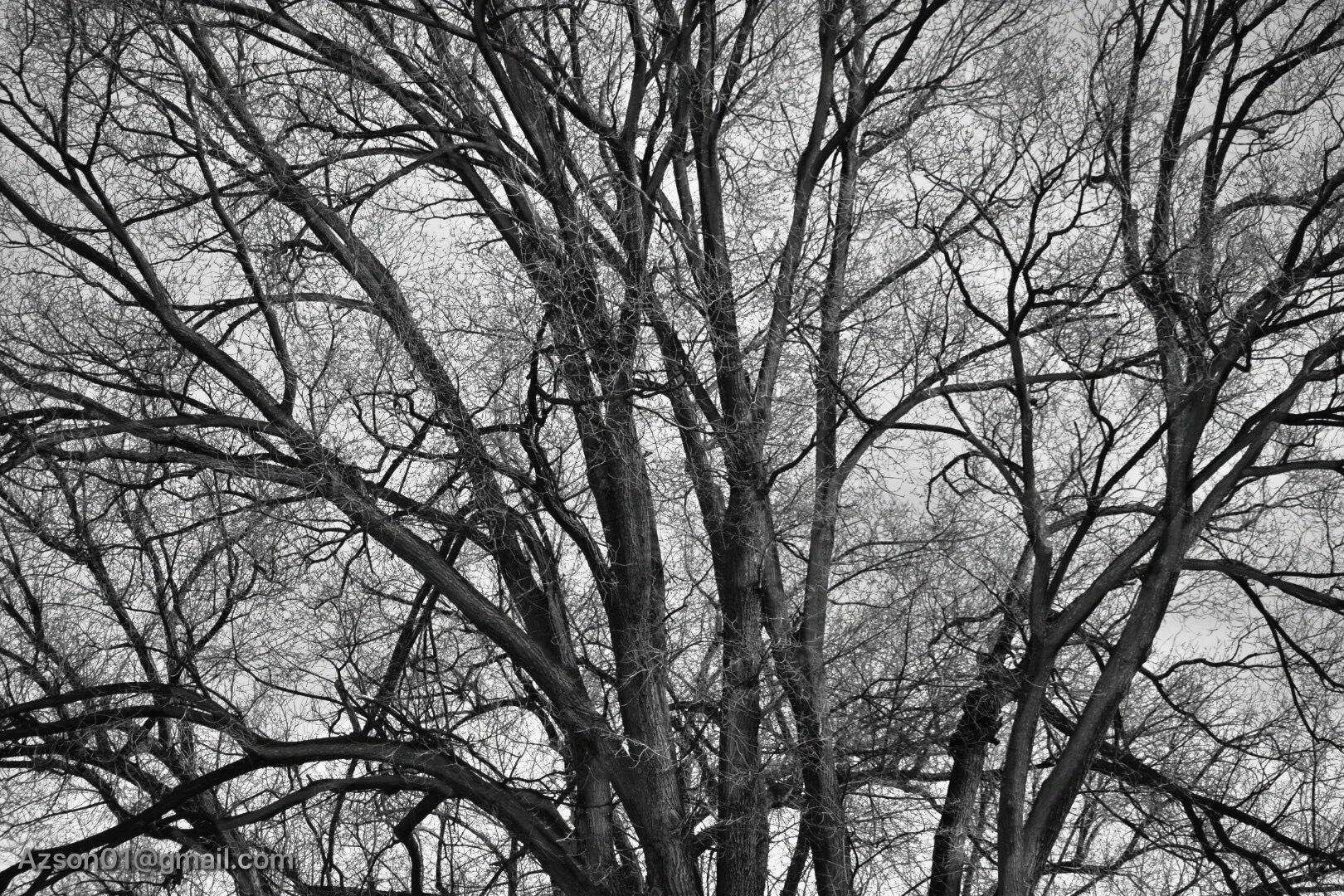 Photo in Black and White #prescott az #arizona #black and white