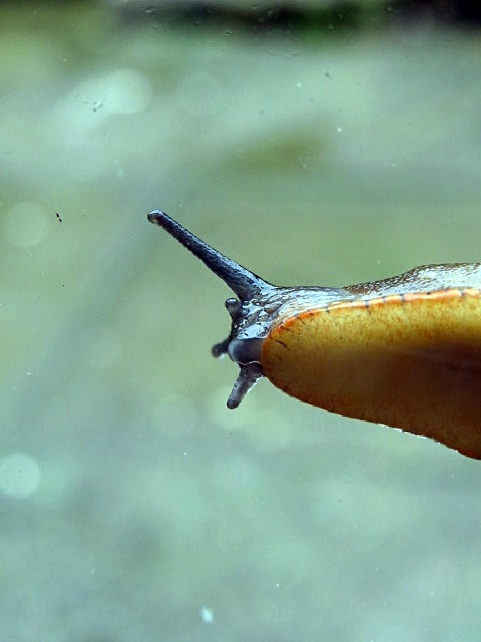 Slug by -Sarah Veness