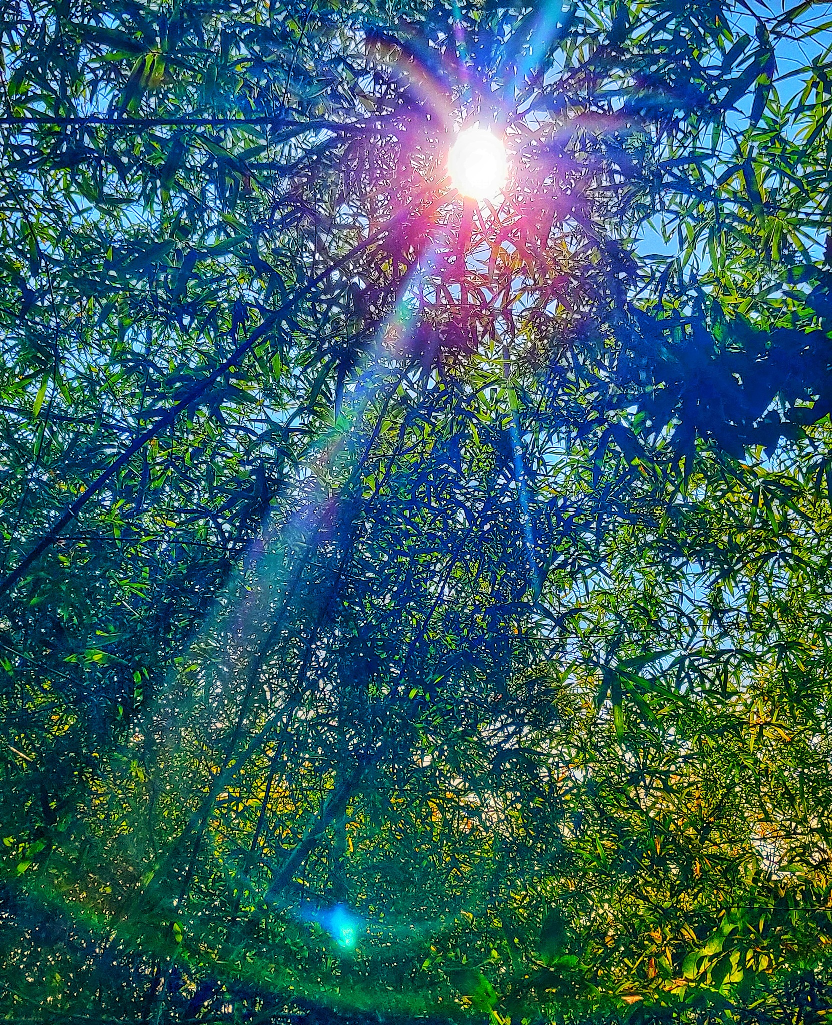 Sunstar Through Trees by by_the_way_23