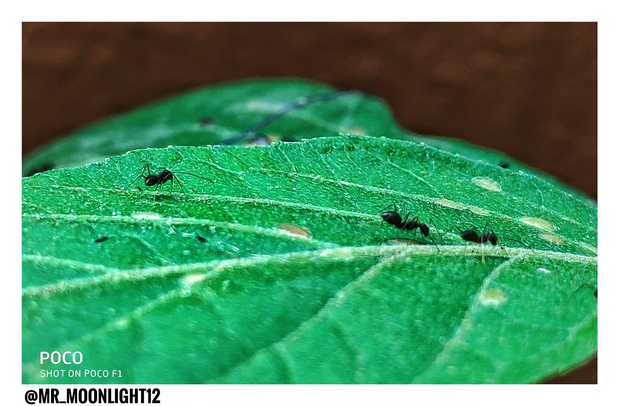 Untitled by Chandraprakash vishwakarma