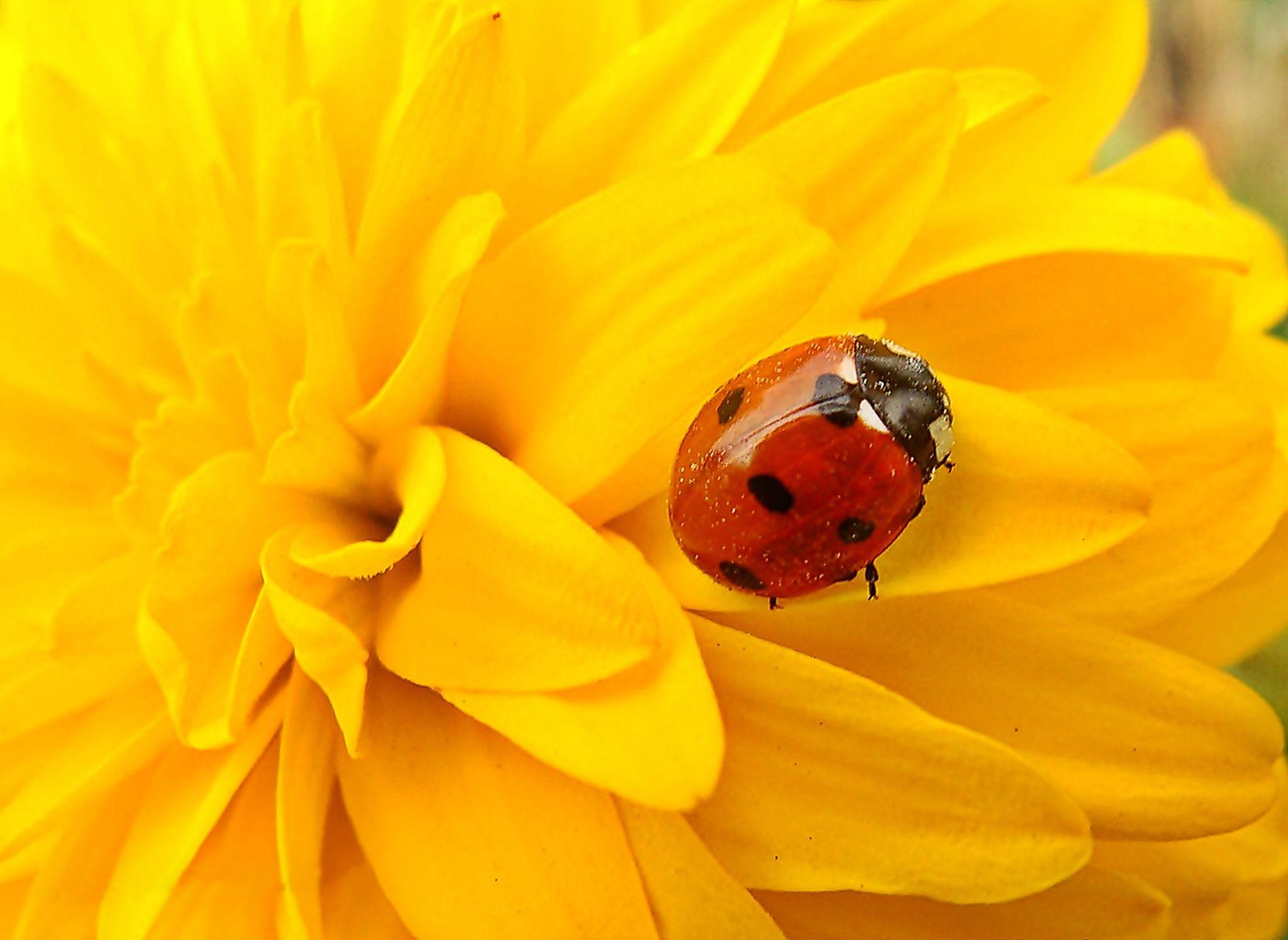Ladybug...... by Silvia Sandrock