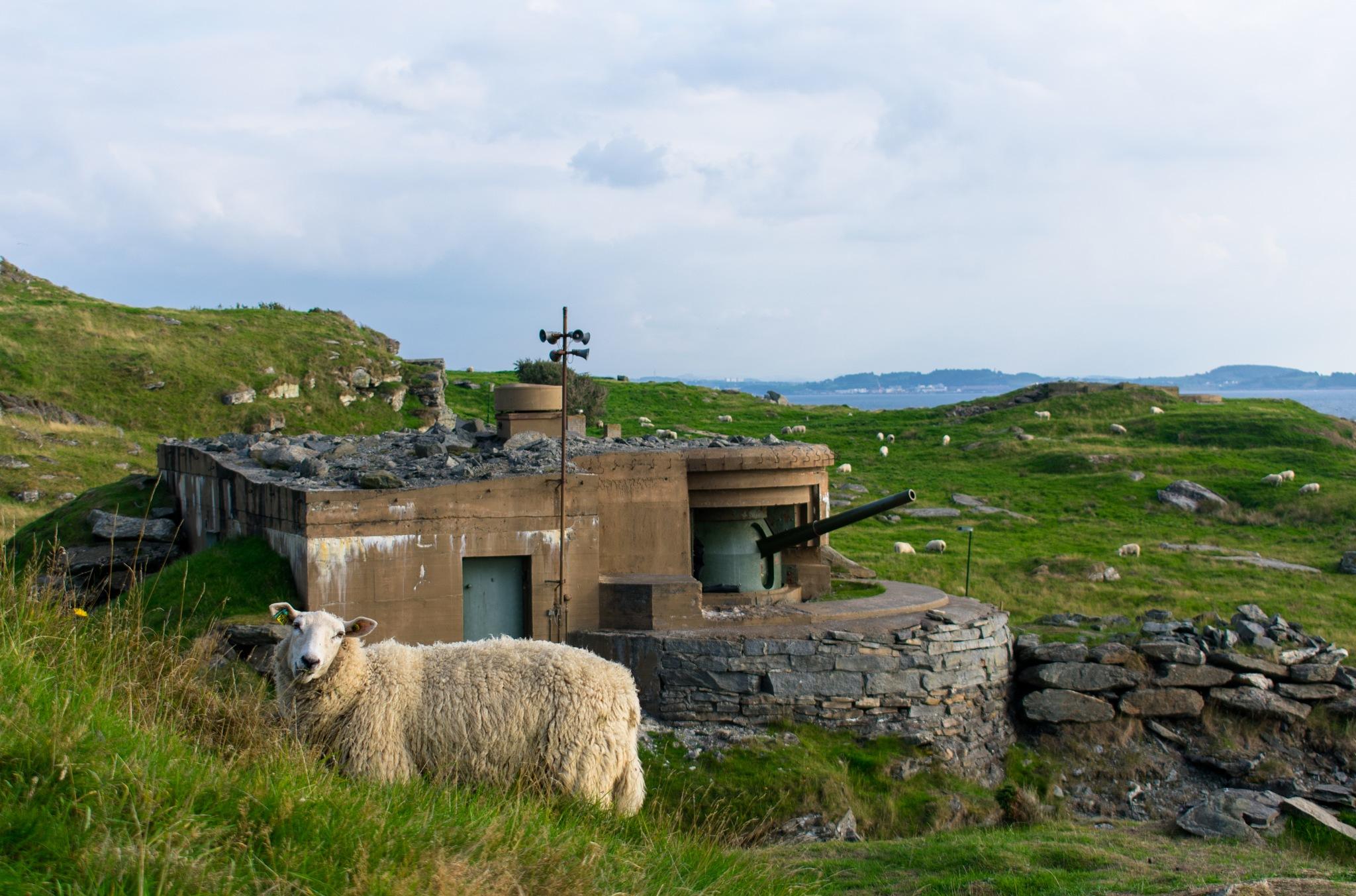 sheep guard by Daniel Eikehaugen Solbakk