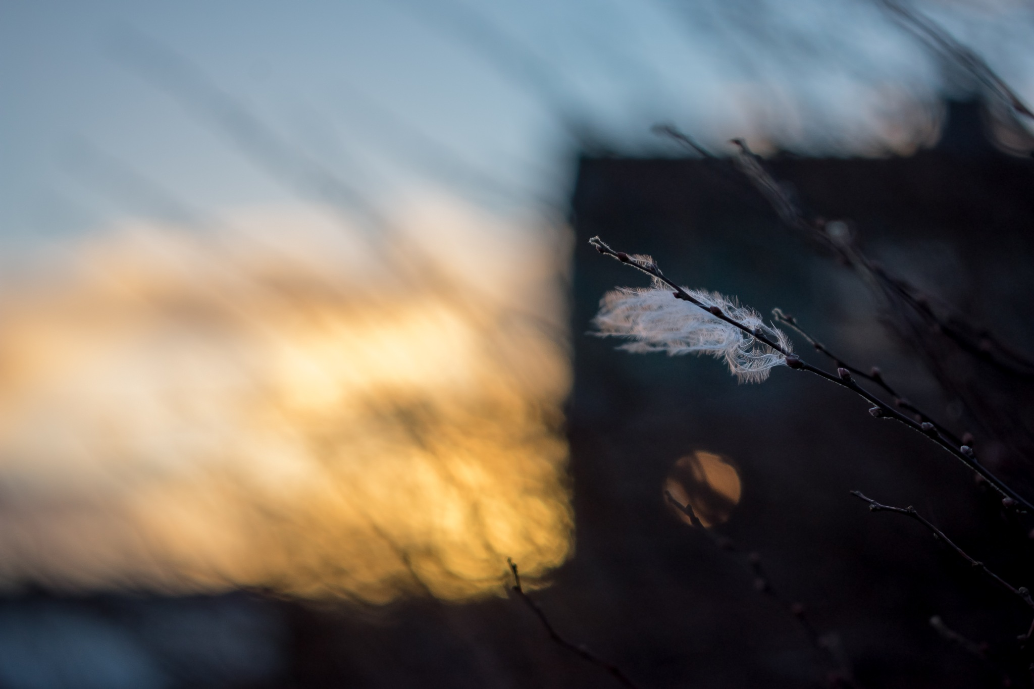 Feathery Sunset by Daniel Eikehaugen Solbakk