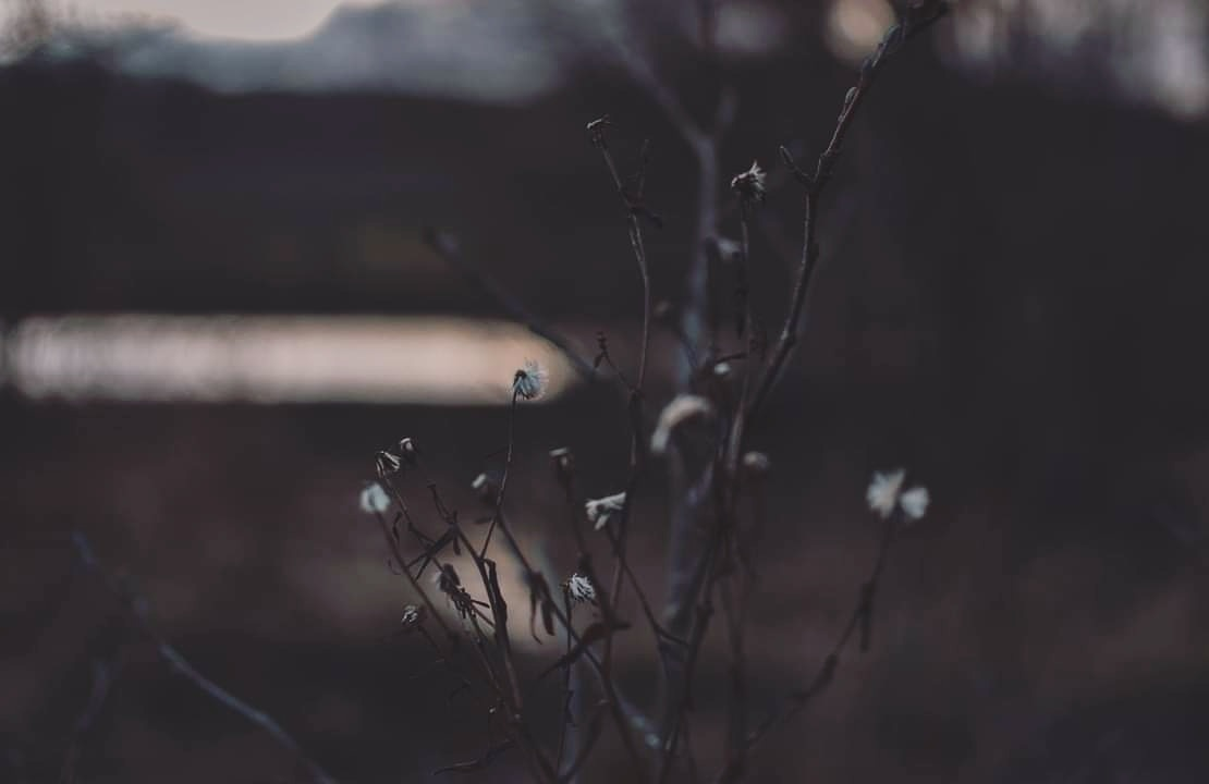 winter light by Sophie Edwards