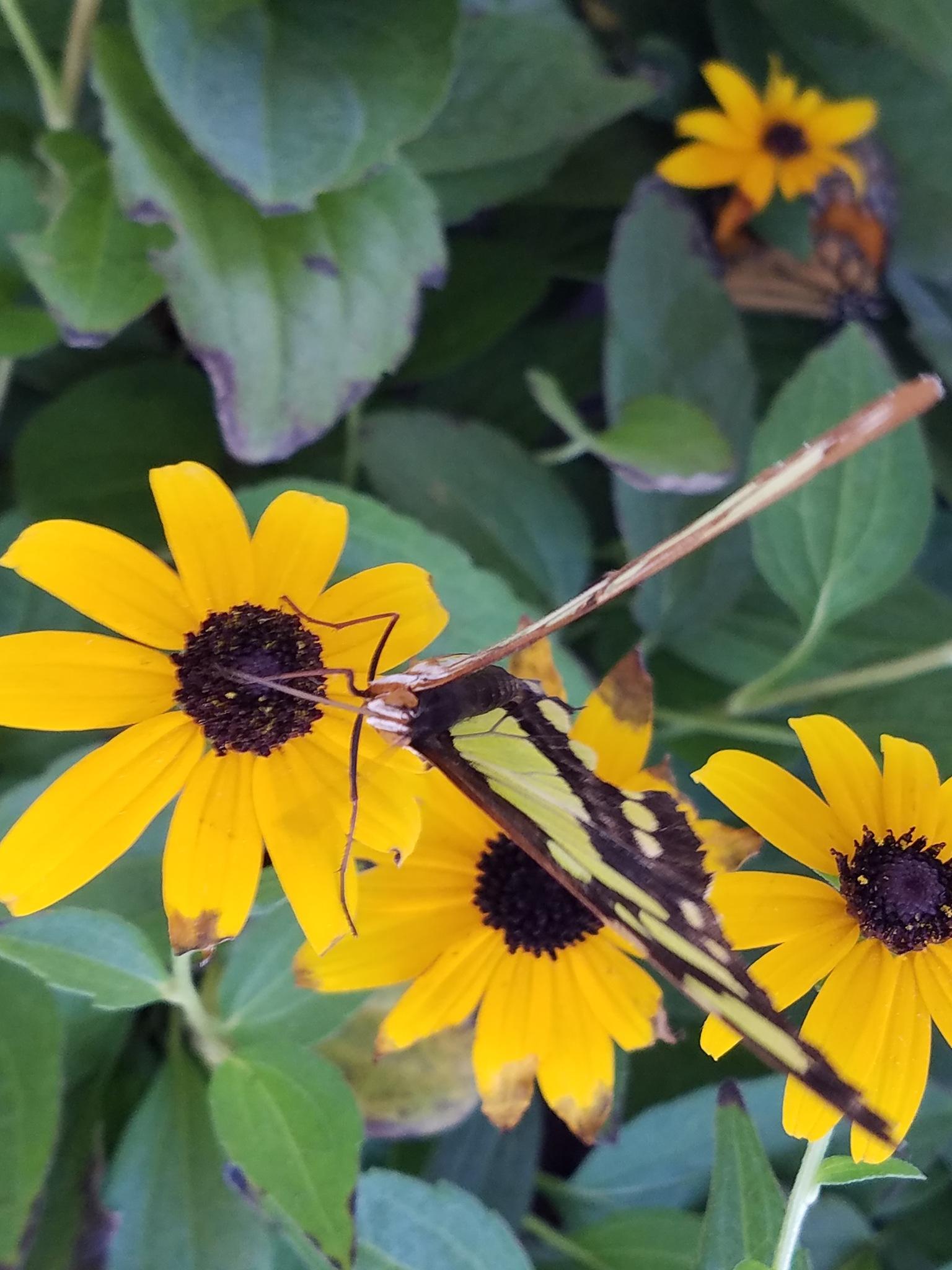 Butterfly  by Geoff