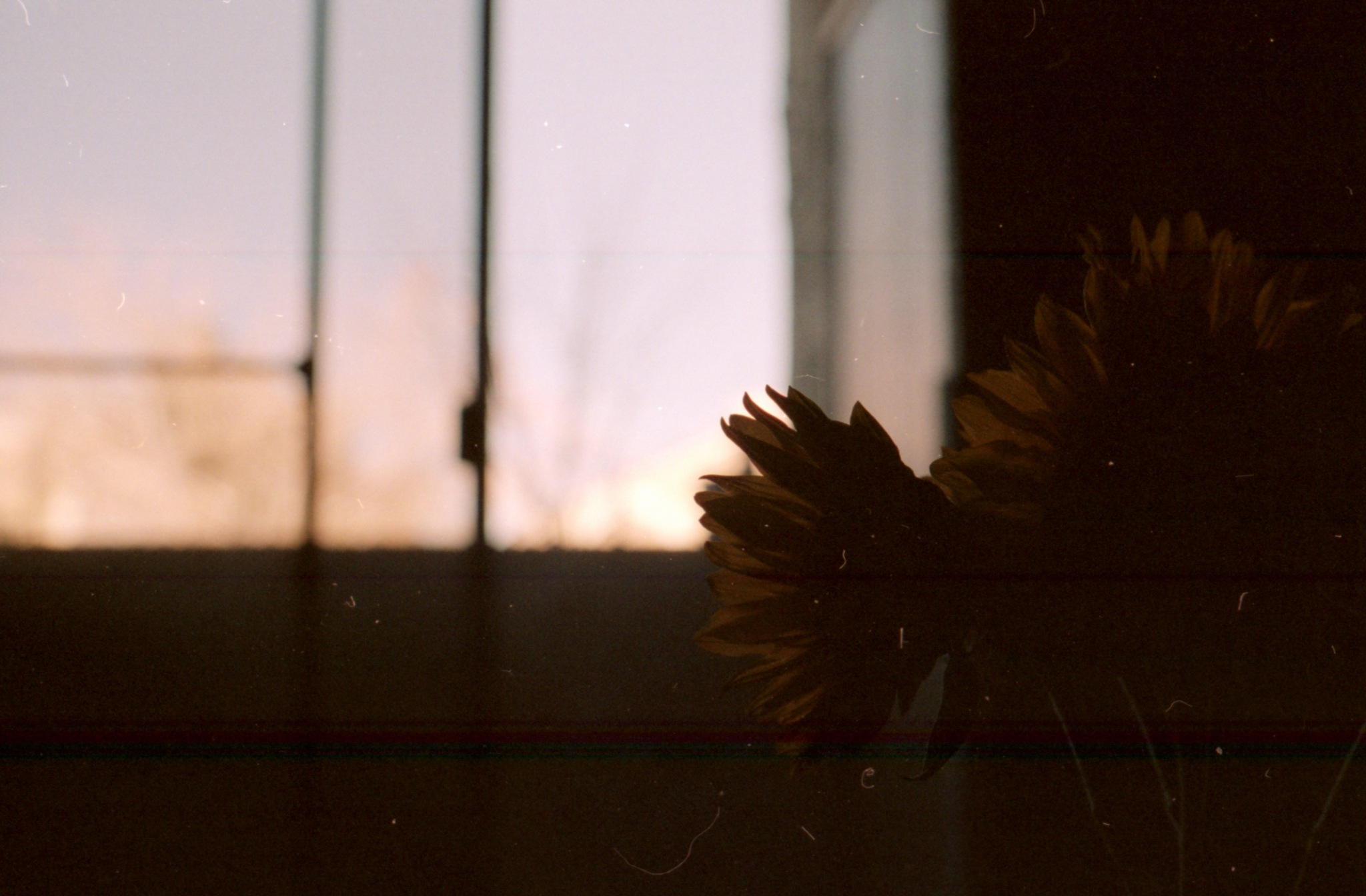 Photo in Film #35mm #nature #flowers #film #random #low light #bokeh #depth of field #blur #film photography #decoration #vintage #still life #under exposed #color negative #color film #portra #kodak #indoor