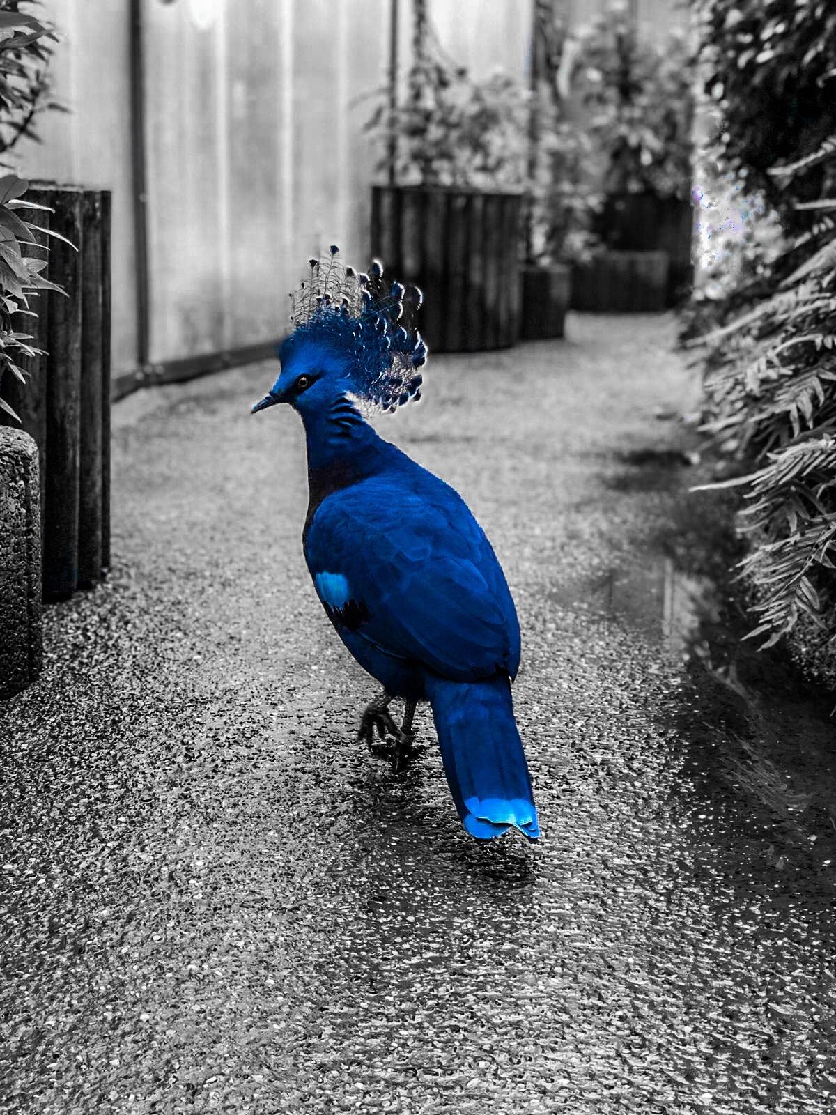Photo in Random #bird #blackandwhite #popupcolor #bw