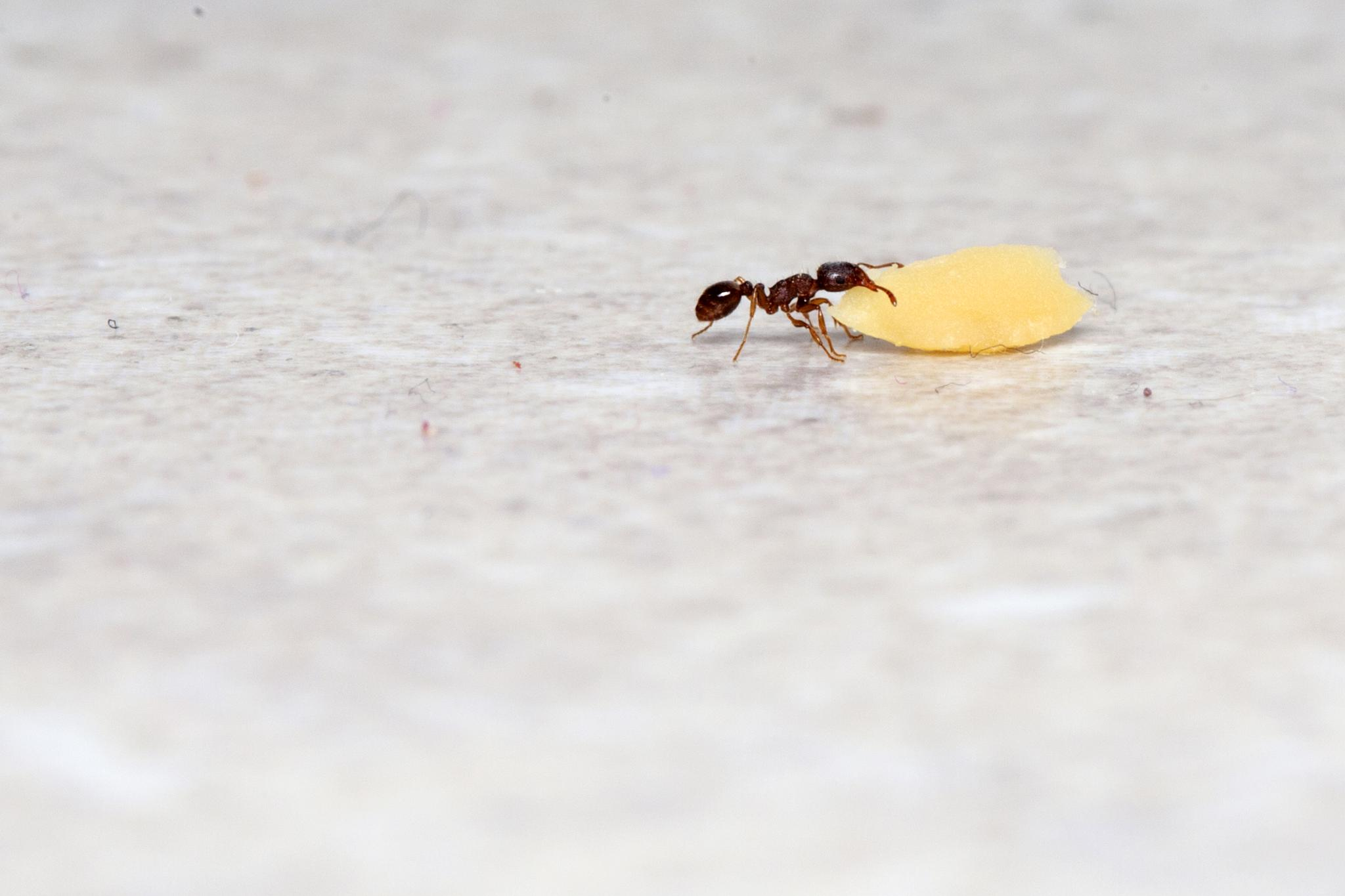 """Alone  Ant Worker! by Джавад """"Photographer"""""""