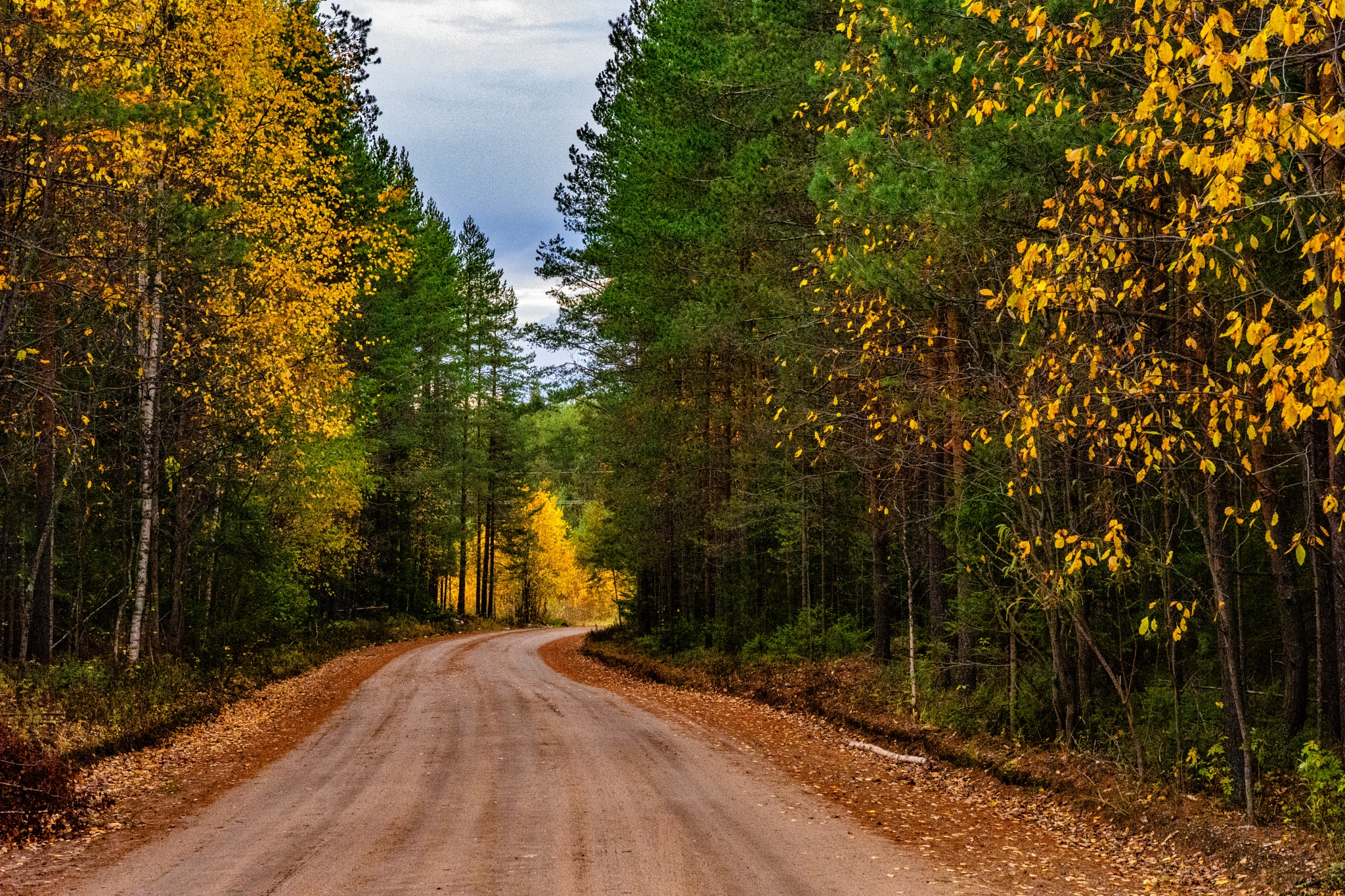 Forest path. by Maksim