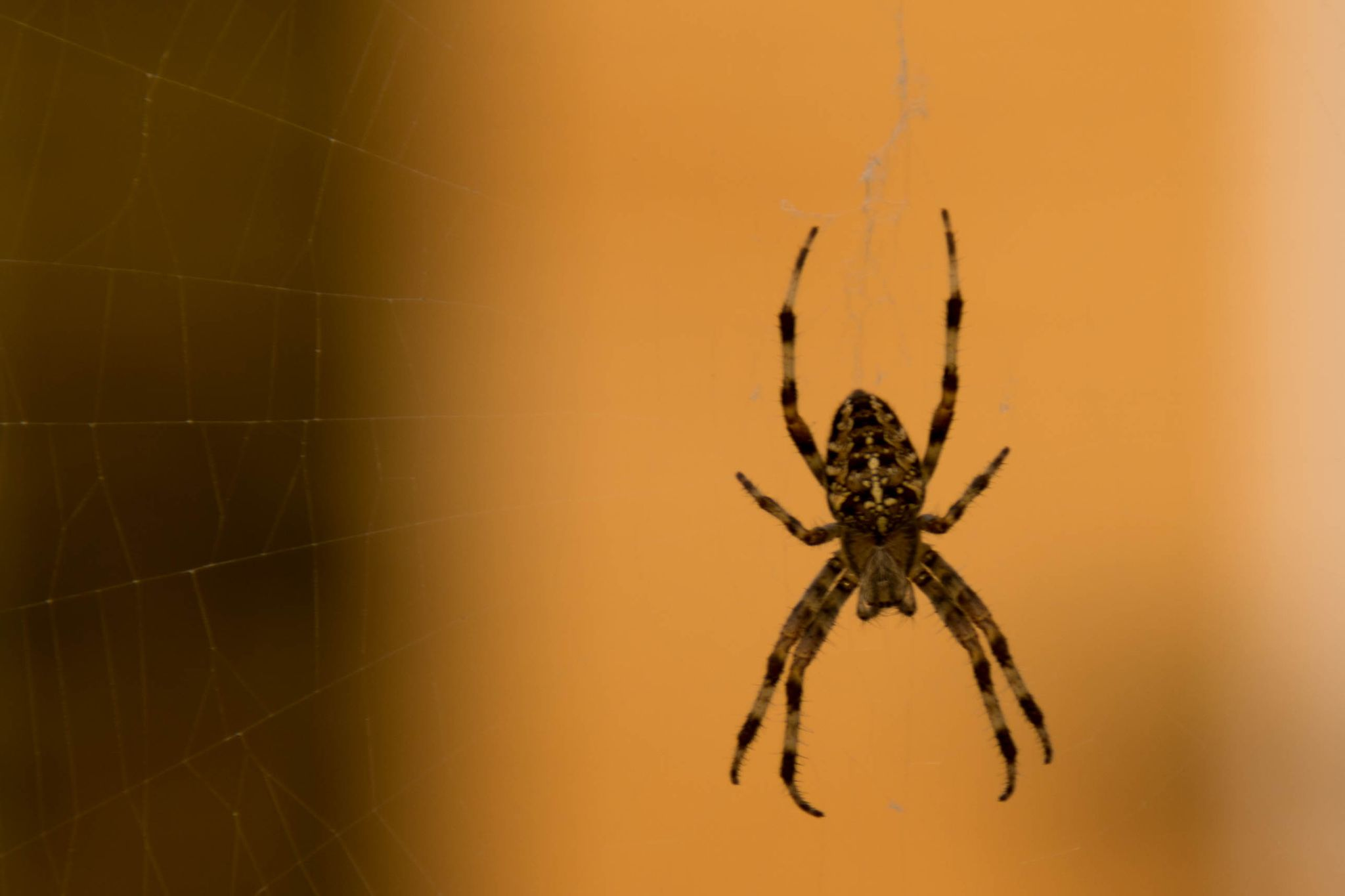 Spider by Andrea Leprini