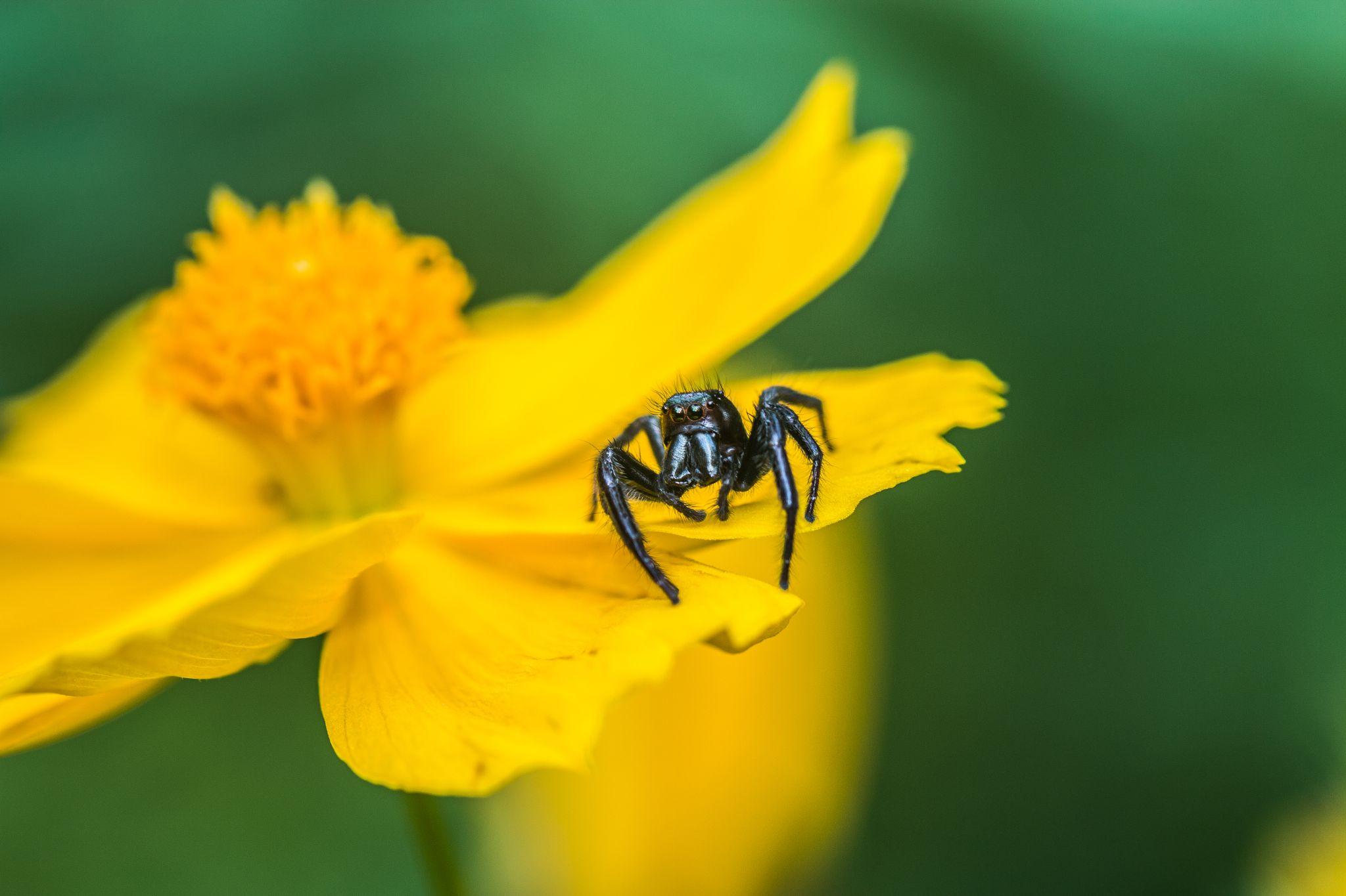 SPIDER by Azad Nechikkade N