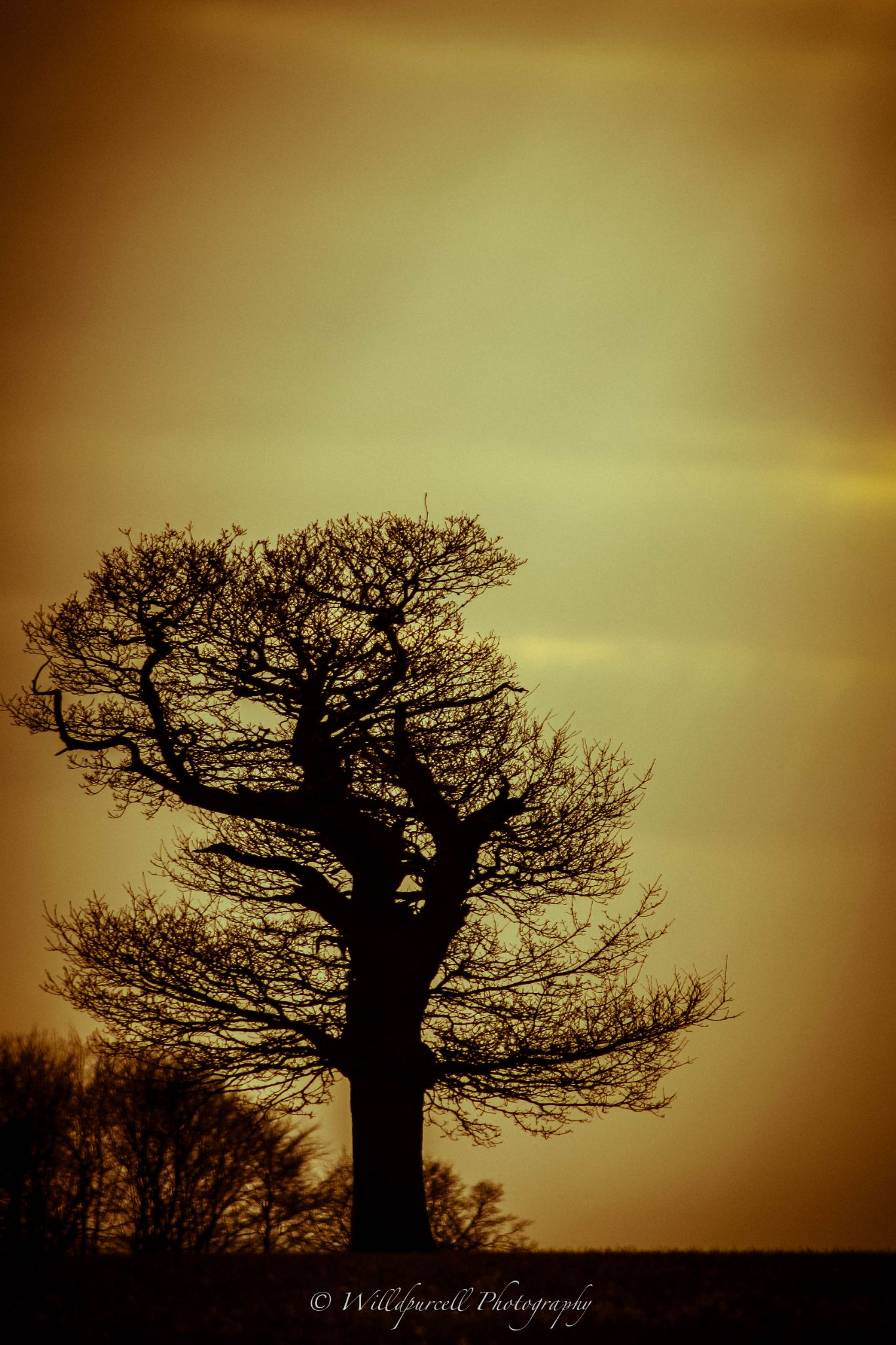 Tree on Ladle Hill by Will Purcell
