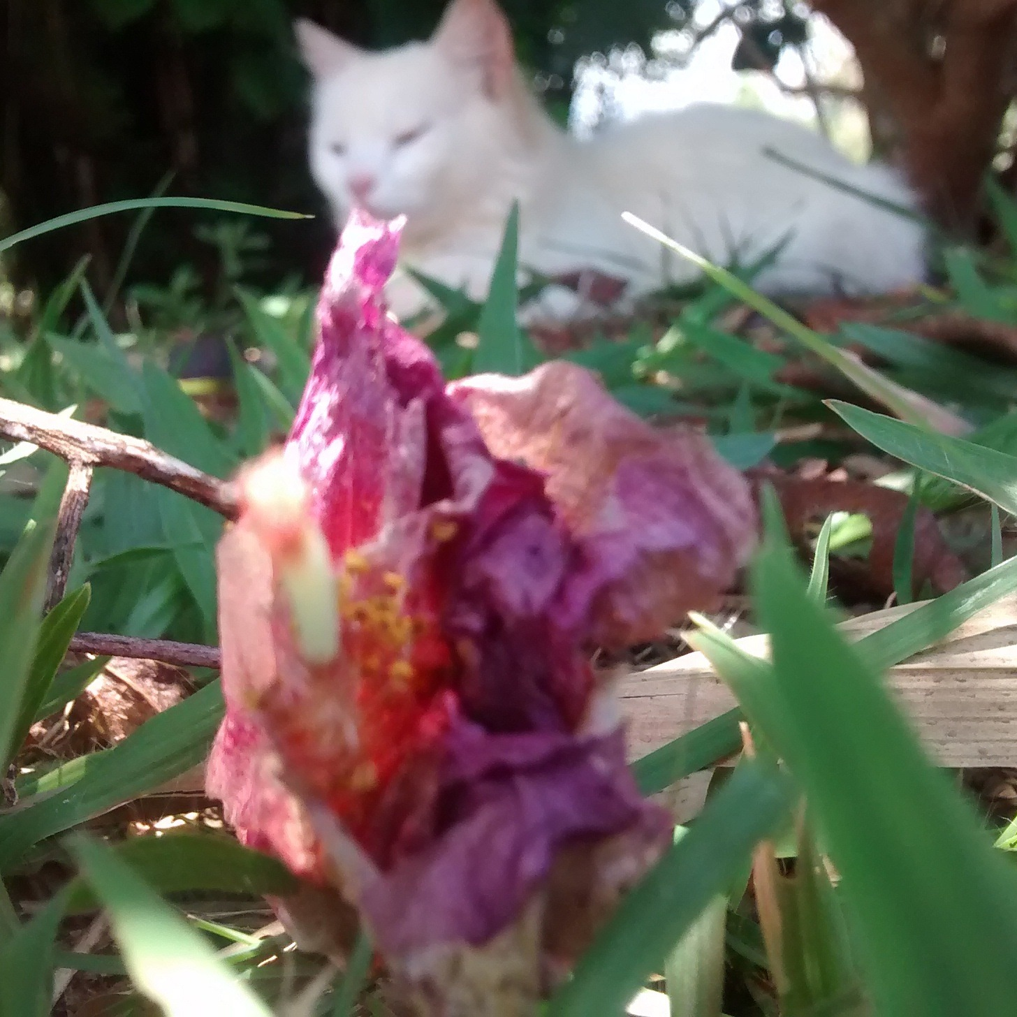 Photo in Random #cat #nature #animal #flower #pink #diihsphotography