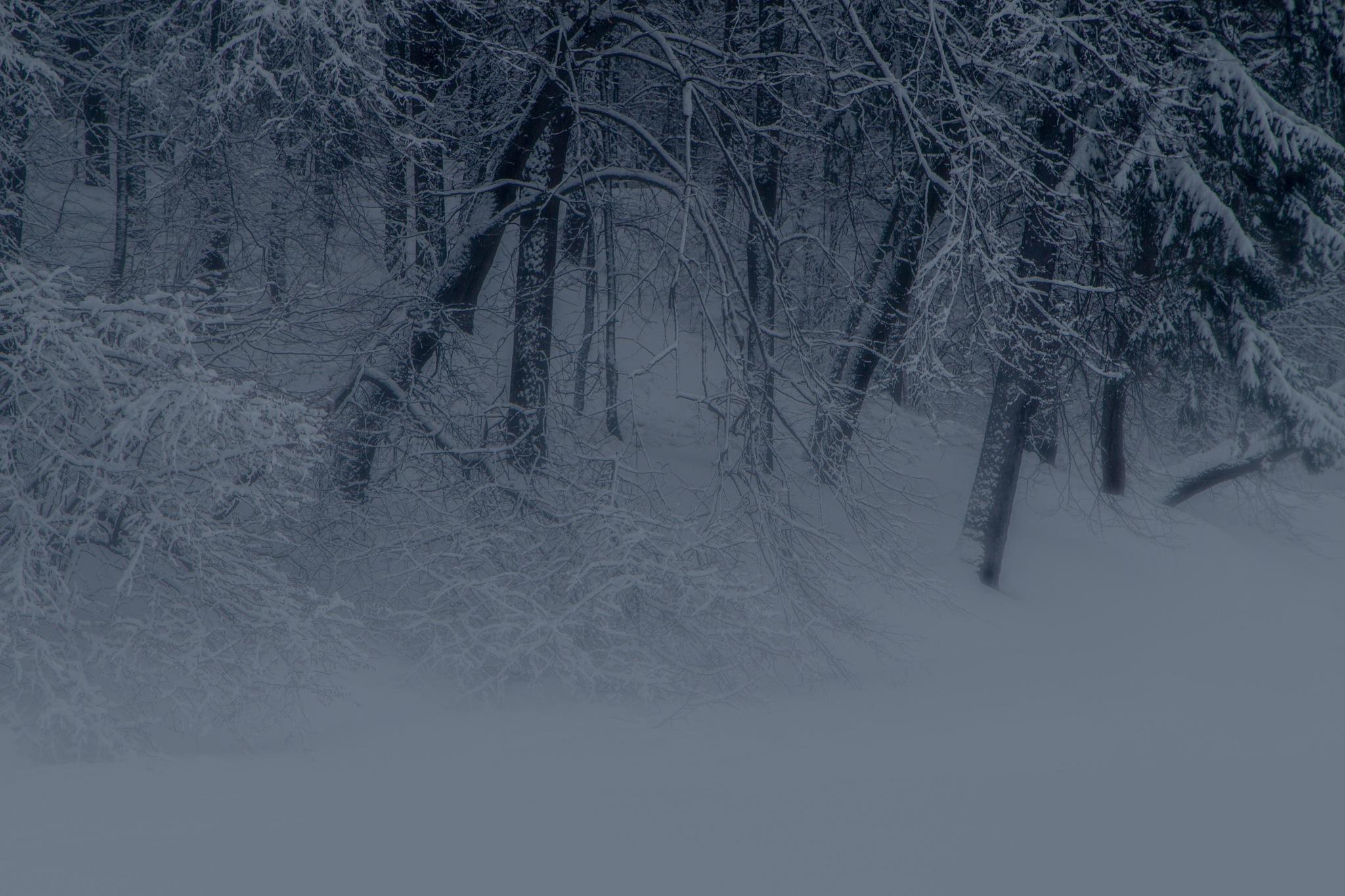 Winter magic by Andrey Domnikov