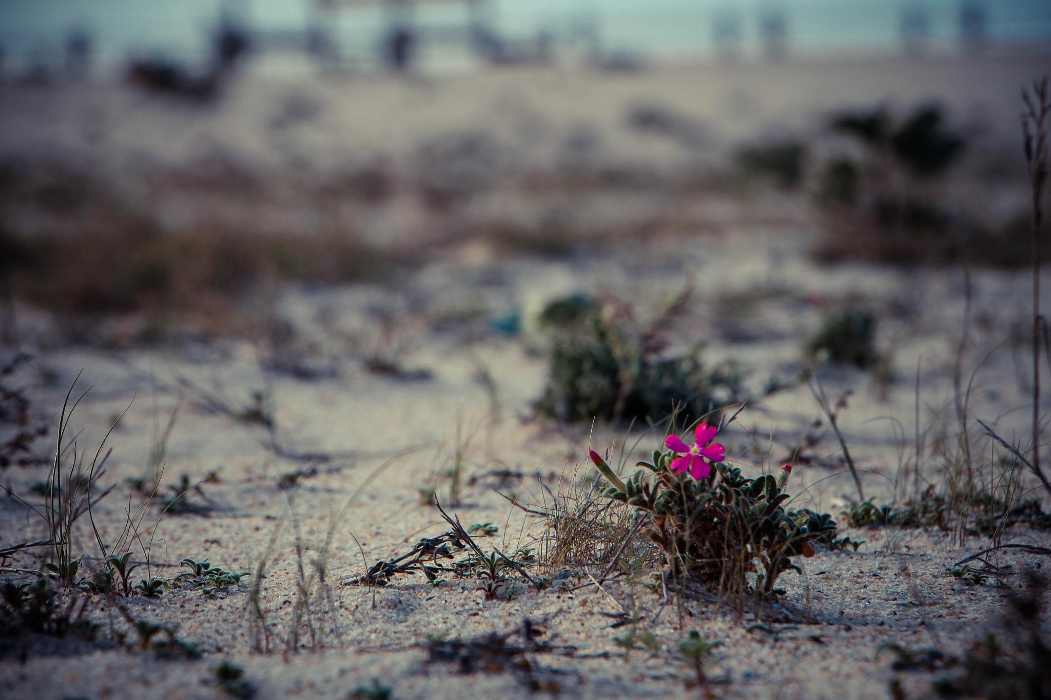 Alone by Mauro Zarkand