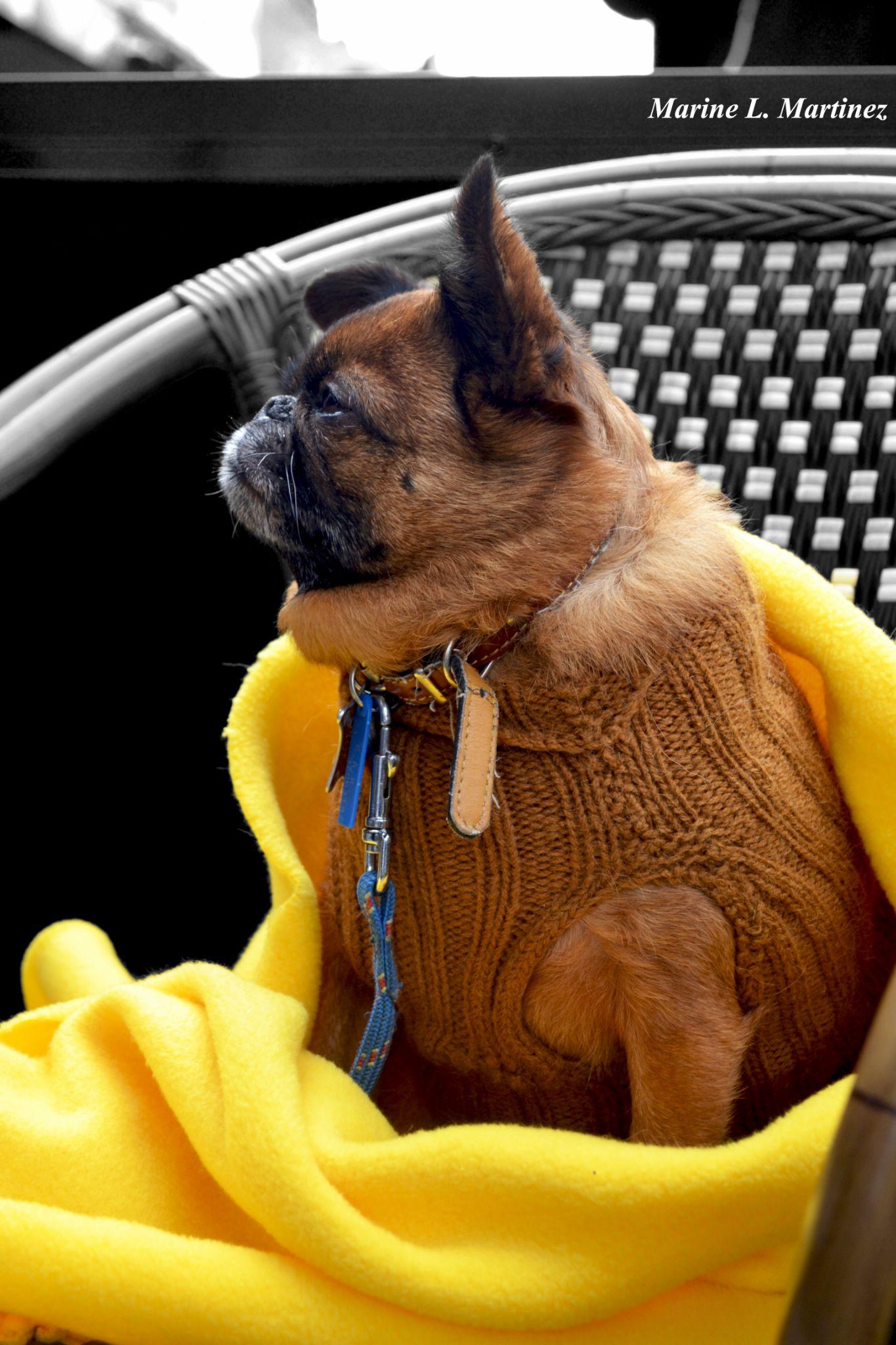 Classy Pug! by Marine Martinez