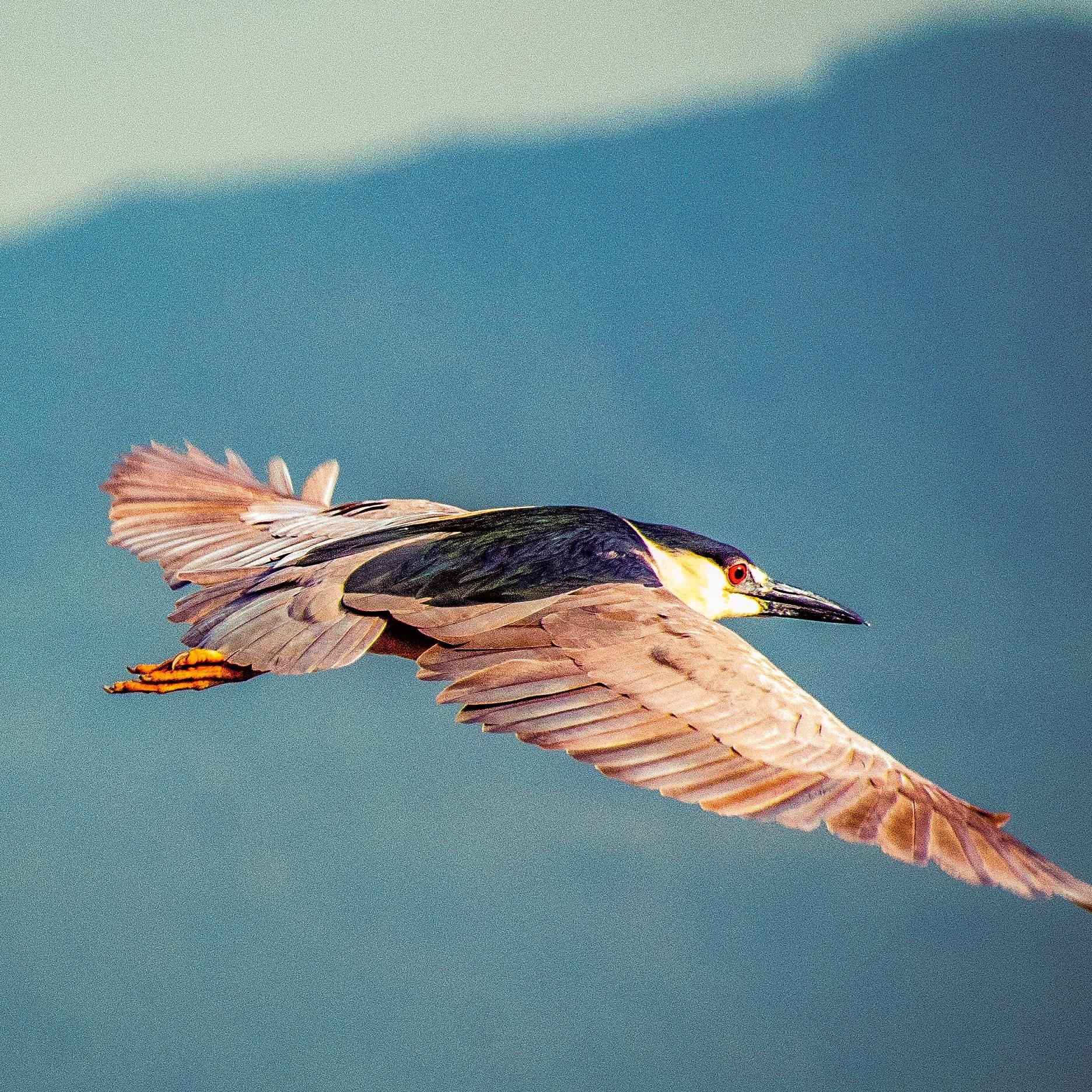 The bird's flight. by Bianca Rocha França