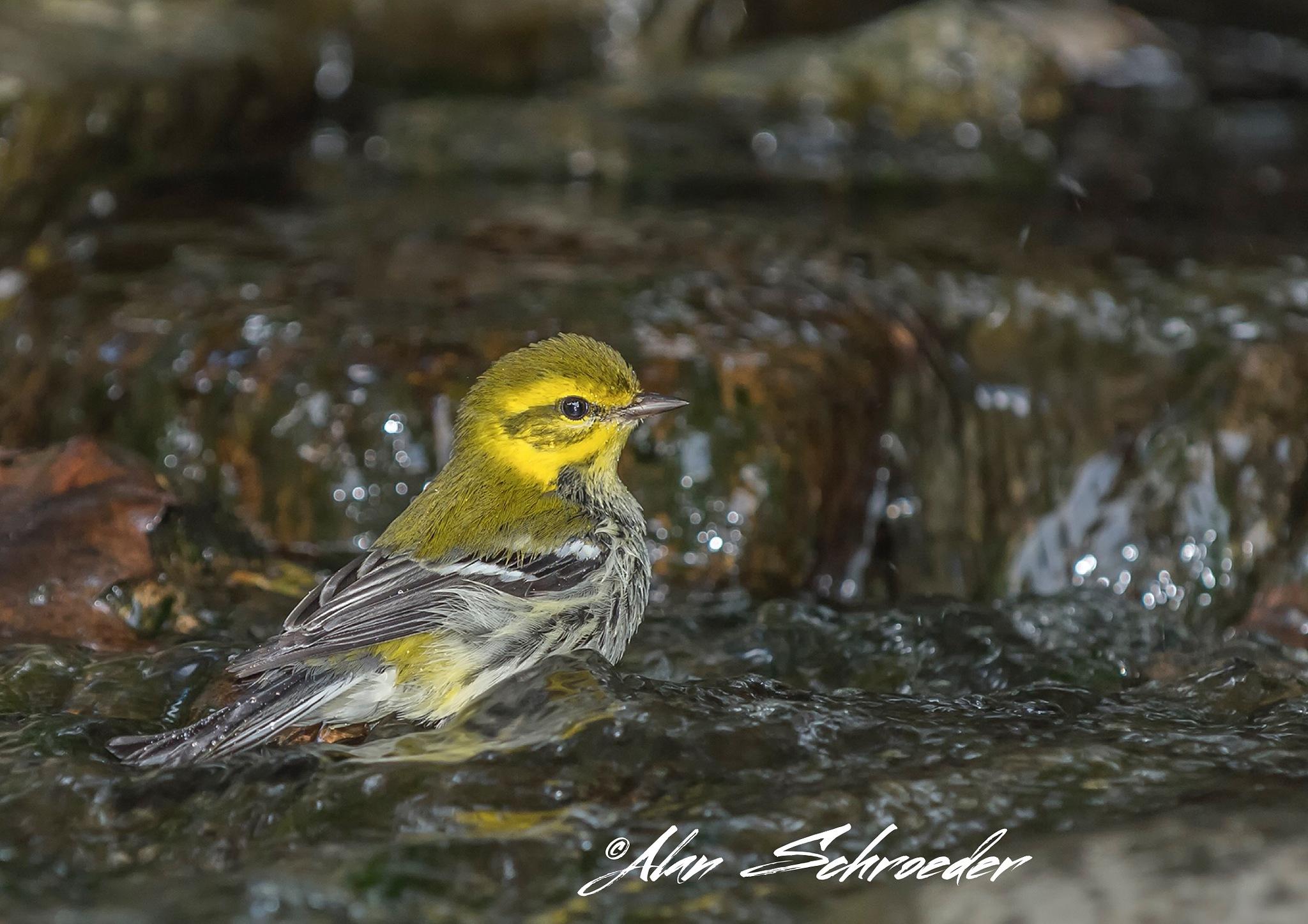 Bath Time by Alan Schroeder