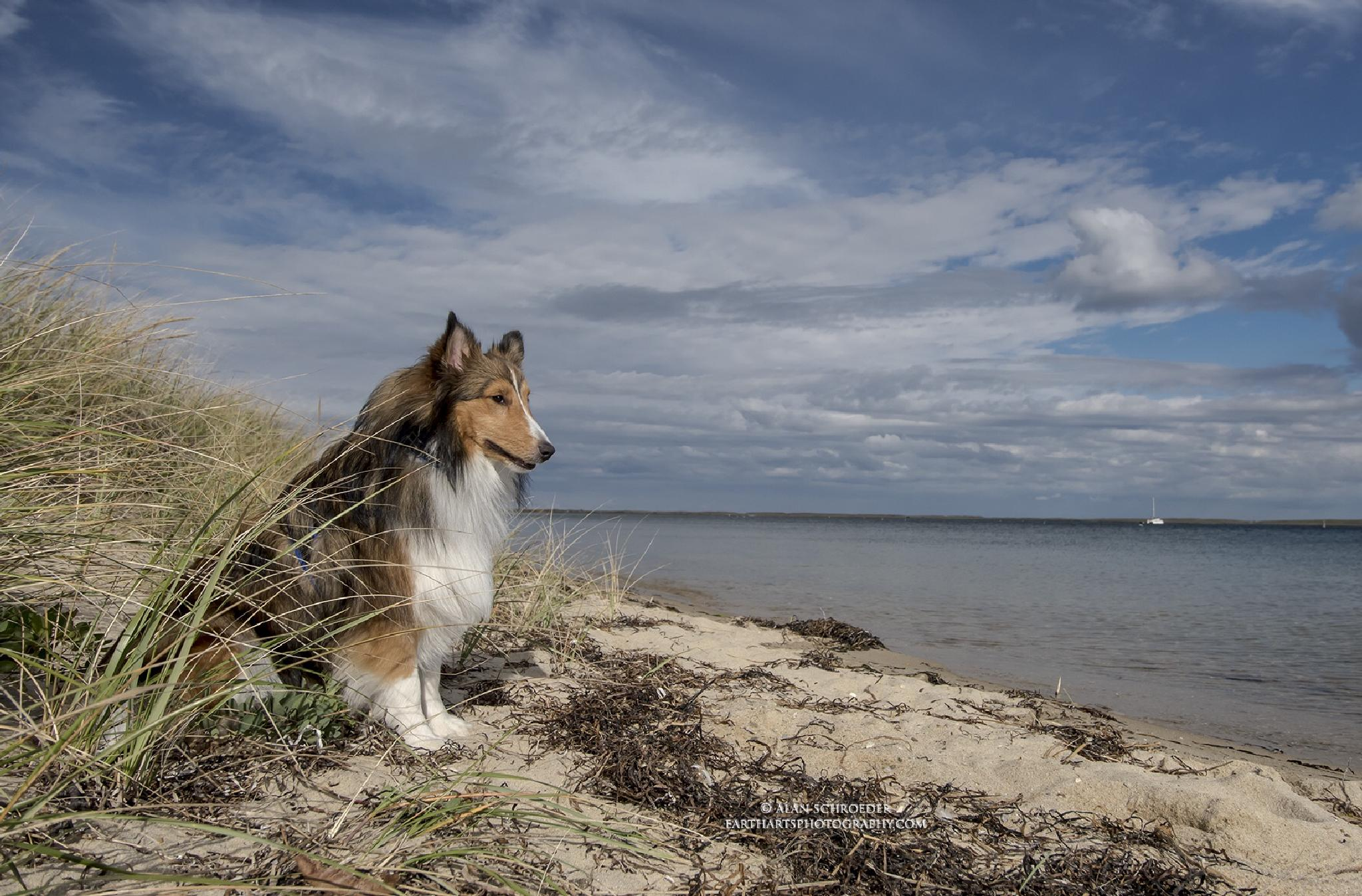 Relaxing at the beach. by Alan Schroeder