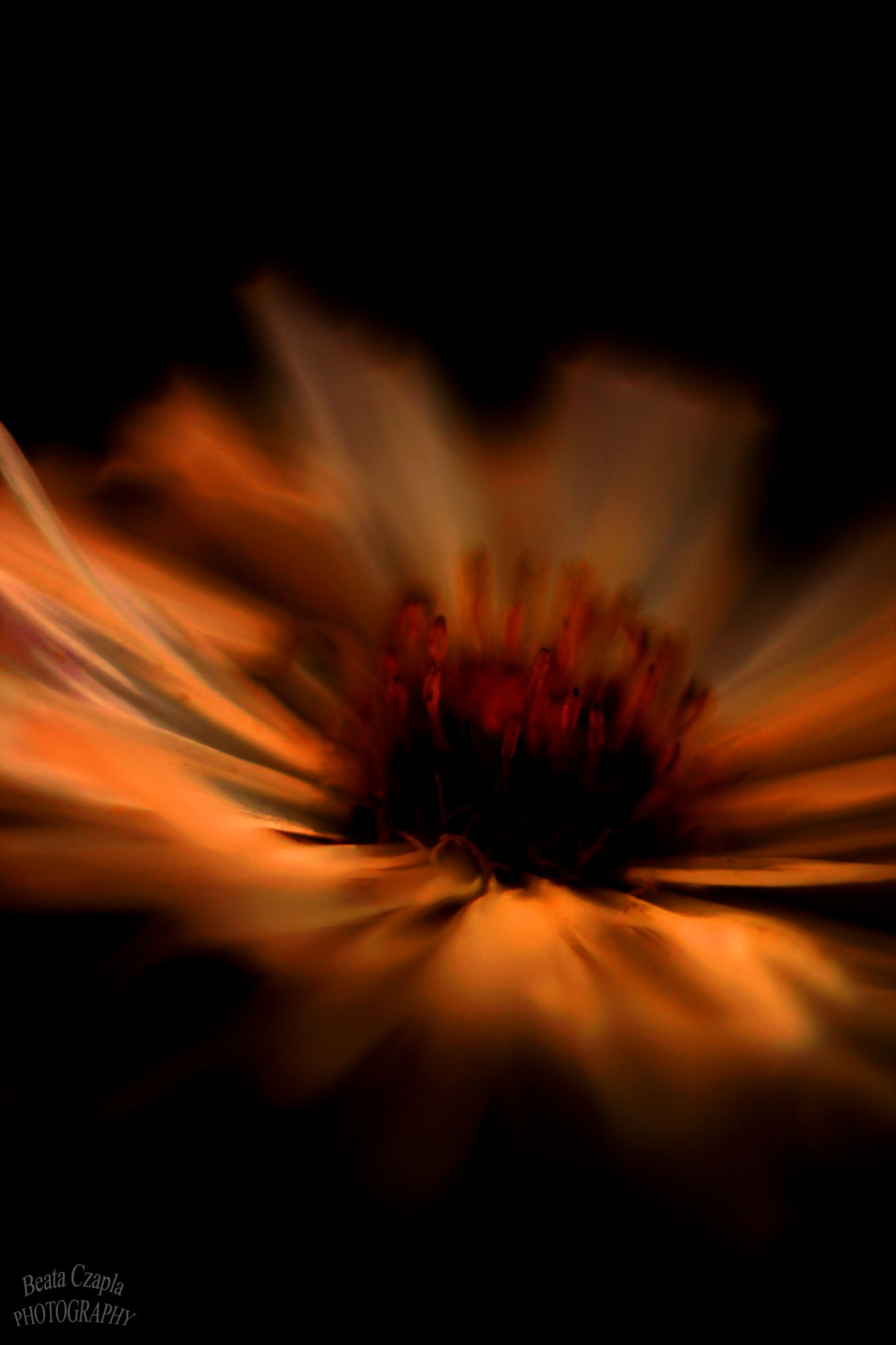 Burning Flowers by Beata Czapla