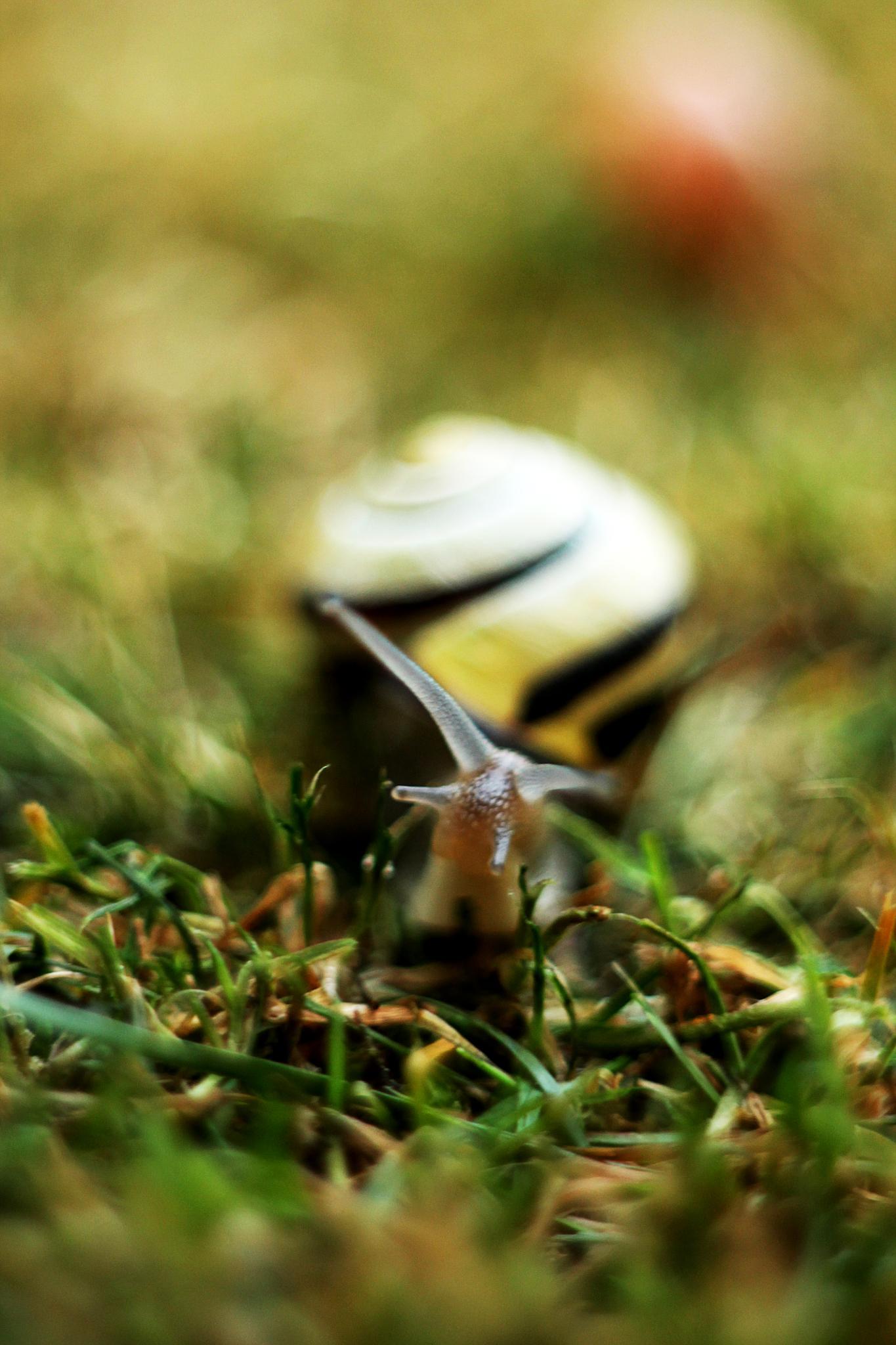 Snail by Beata Czapla