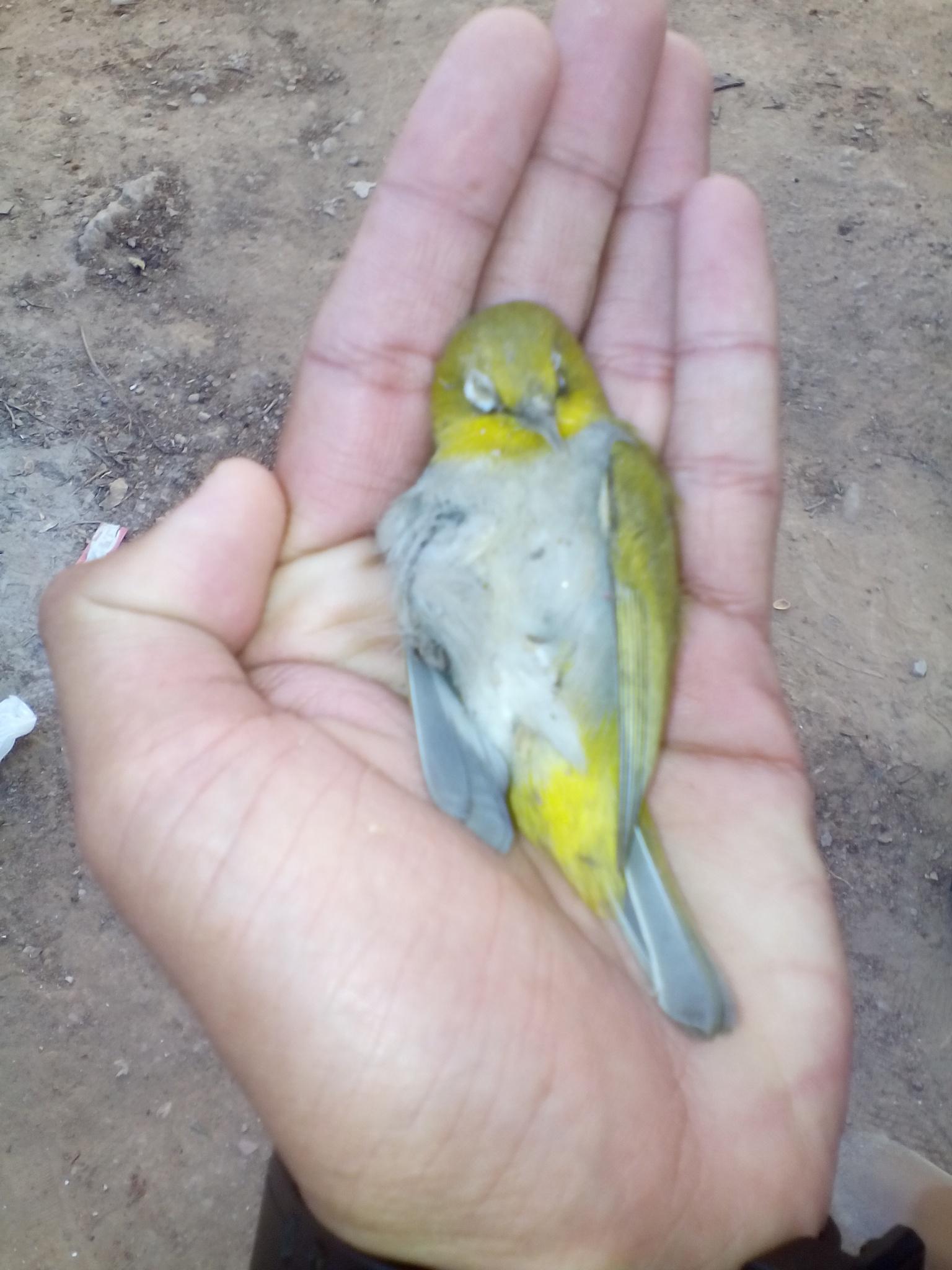 save nature by Yugam Kaka