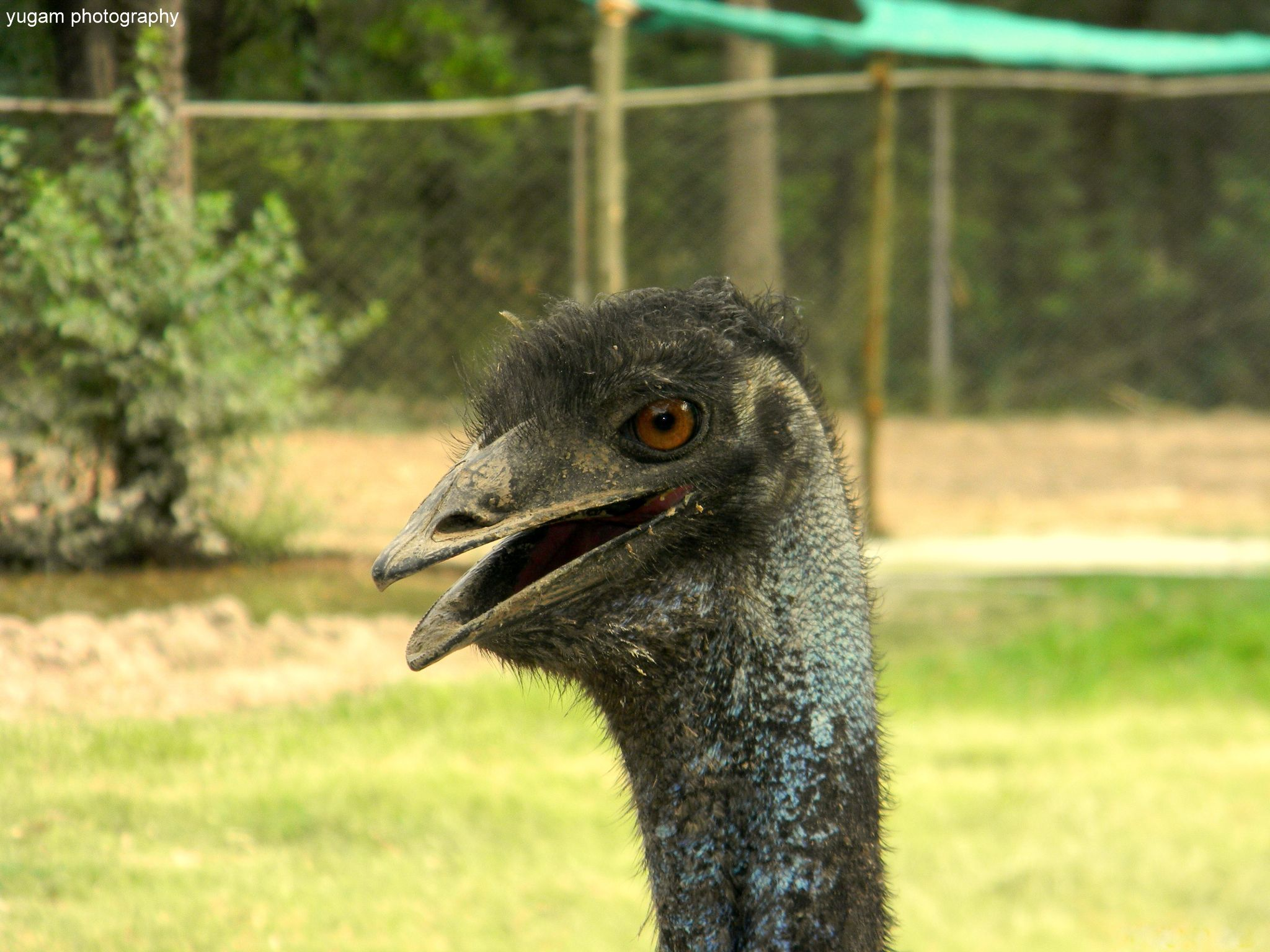 ostrich by Yugam Kaka