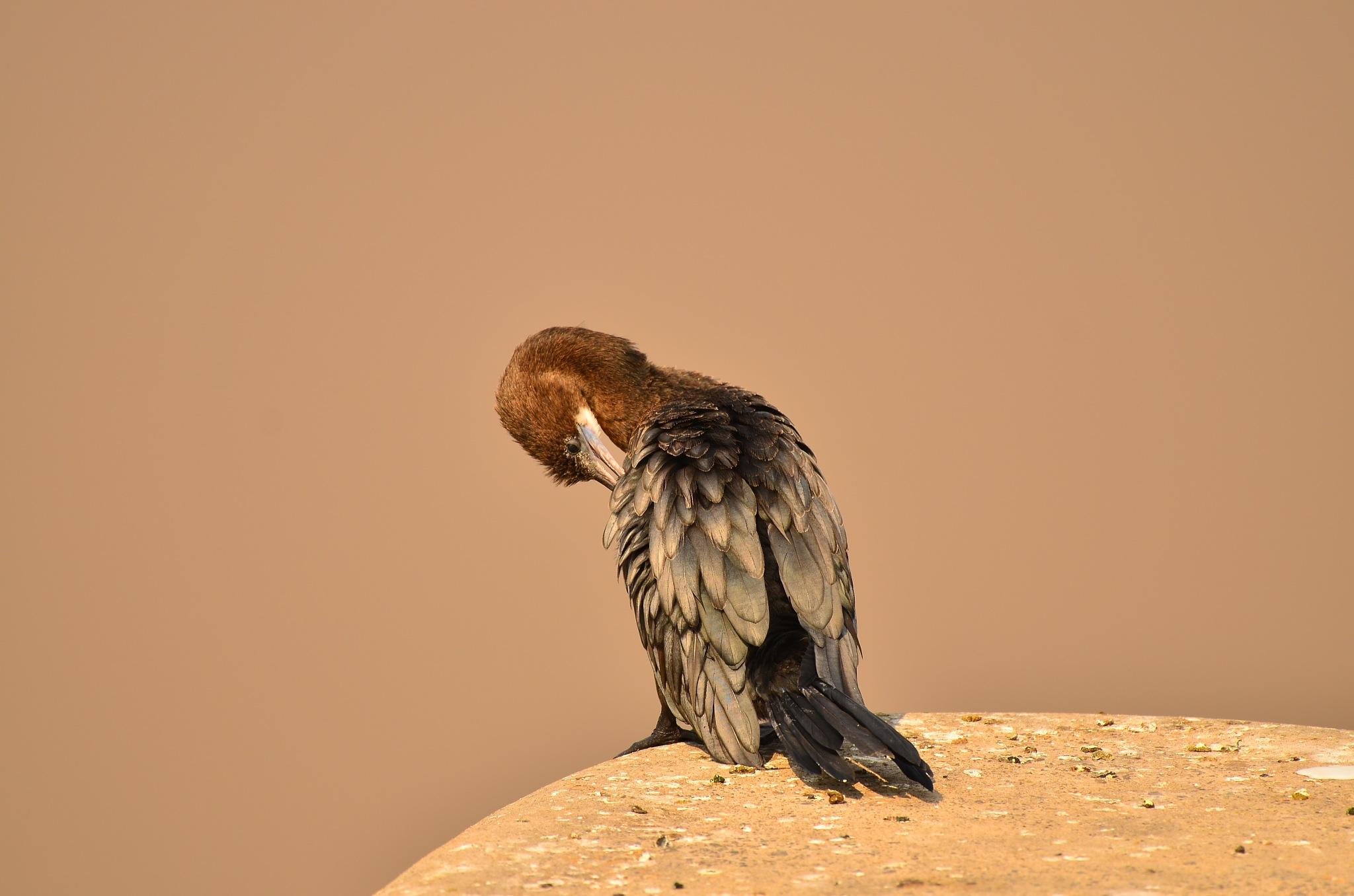 water crow by Yugam Kaka