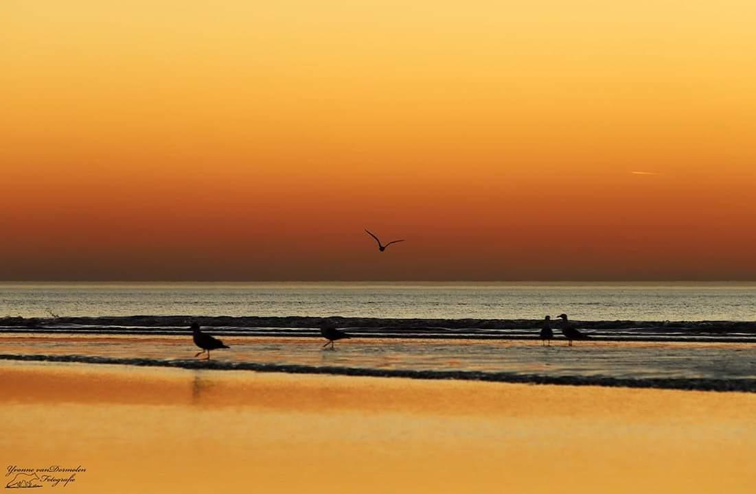 Photo in Nature #sunset #beach #colours #sunsetphotography #wonderful