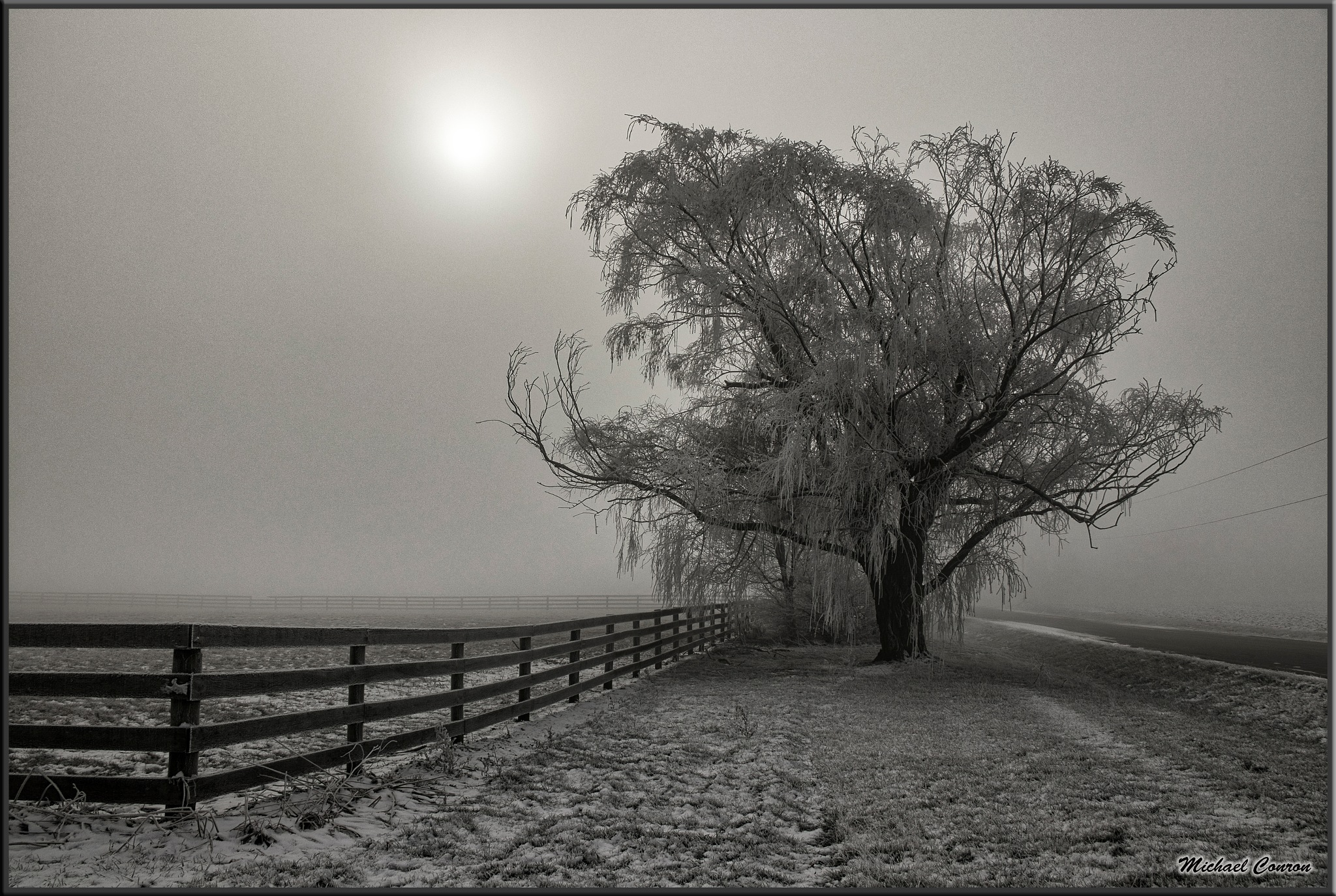 Into the Mist by Michael Conron