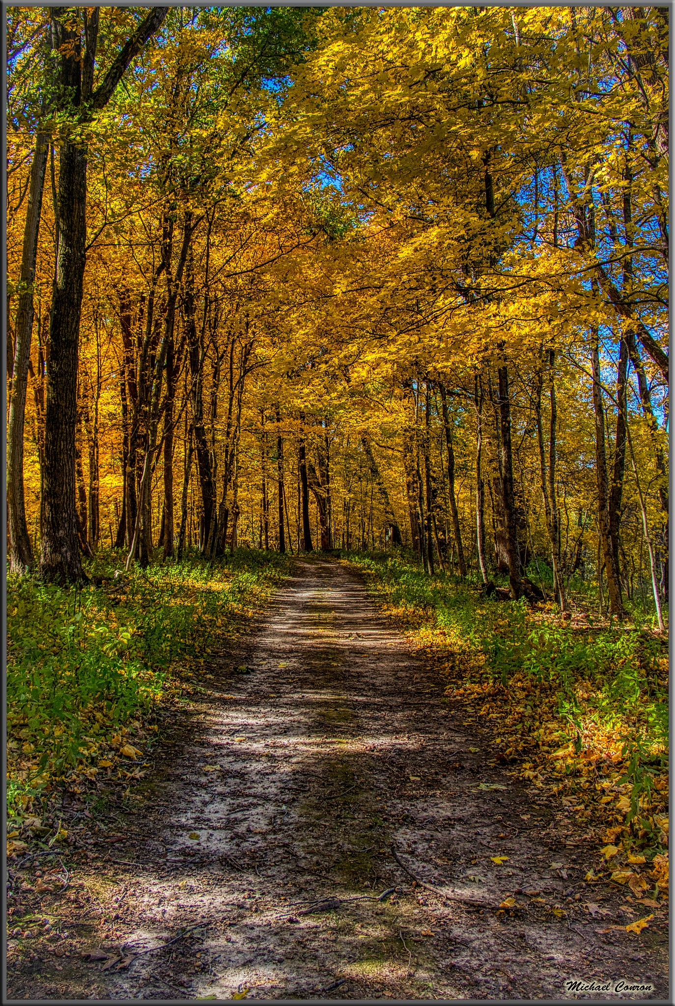 Photo in Landscape #fall #autum #maple #trees #woods #midwest