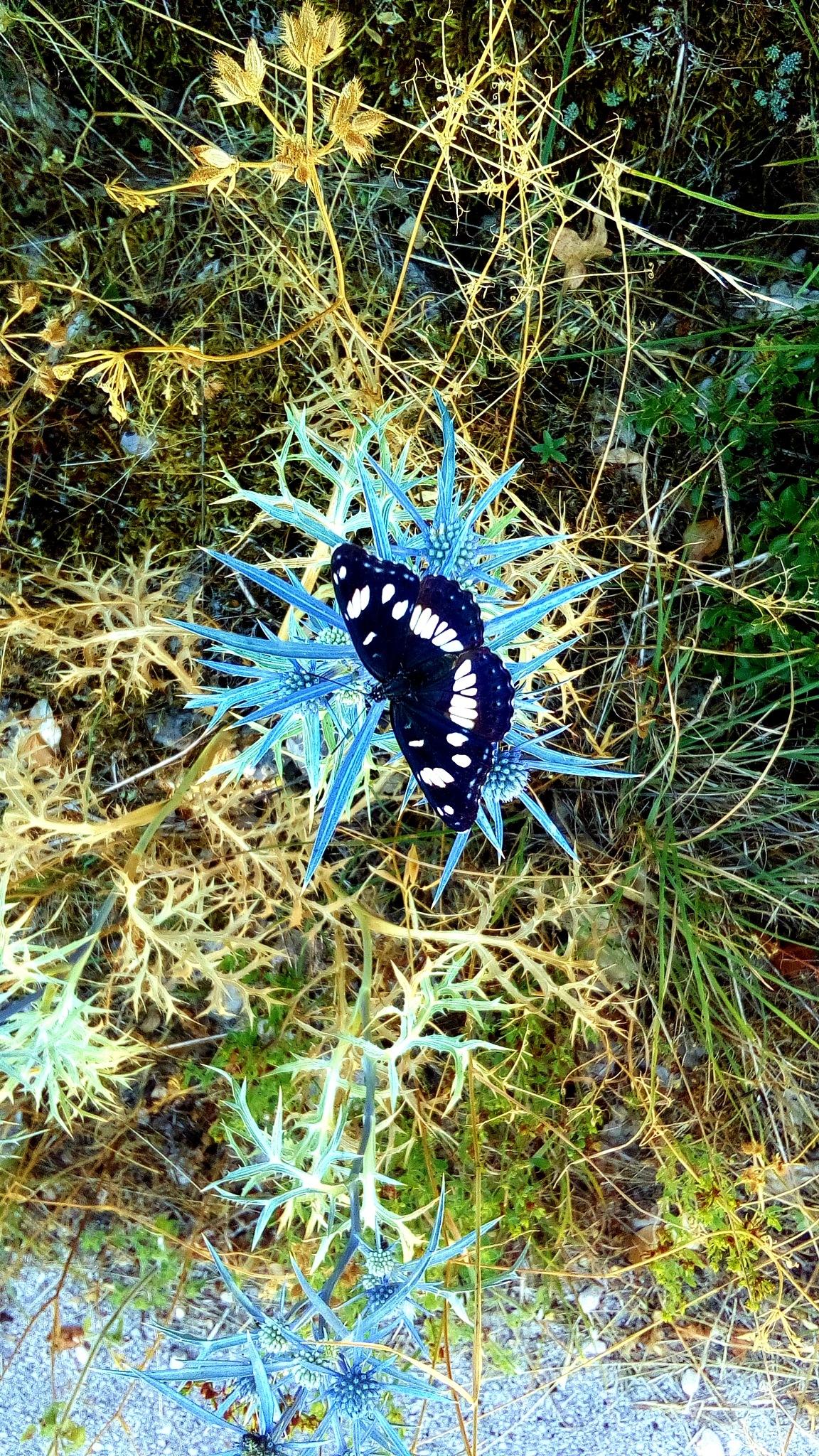 Butterfly by glogloriabanic