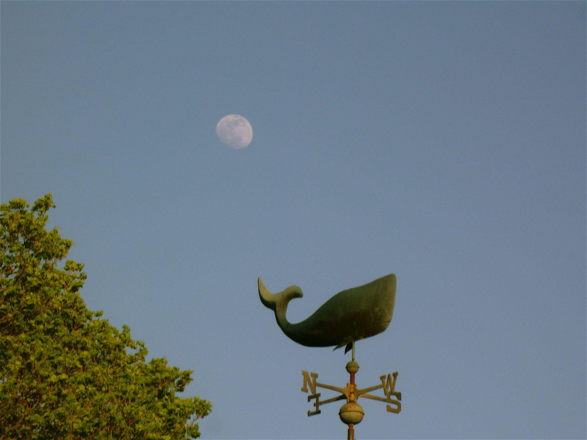 Shadow Moon by Jan Muzzi