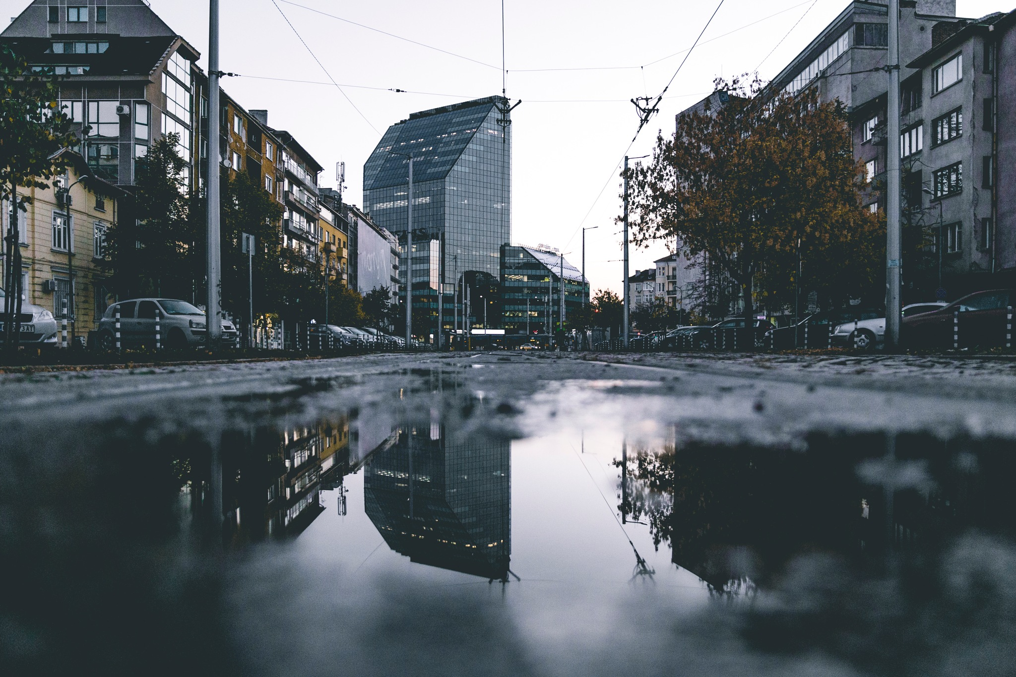 Reflection by Petar