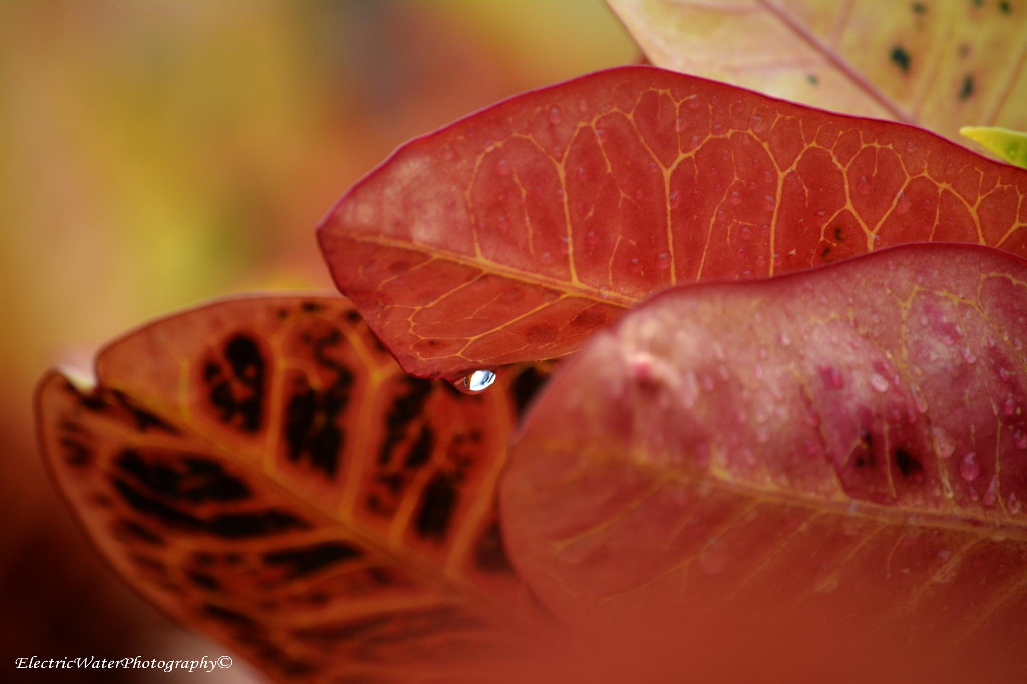 Red Leaves by Electricwaterphotography