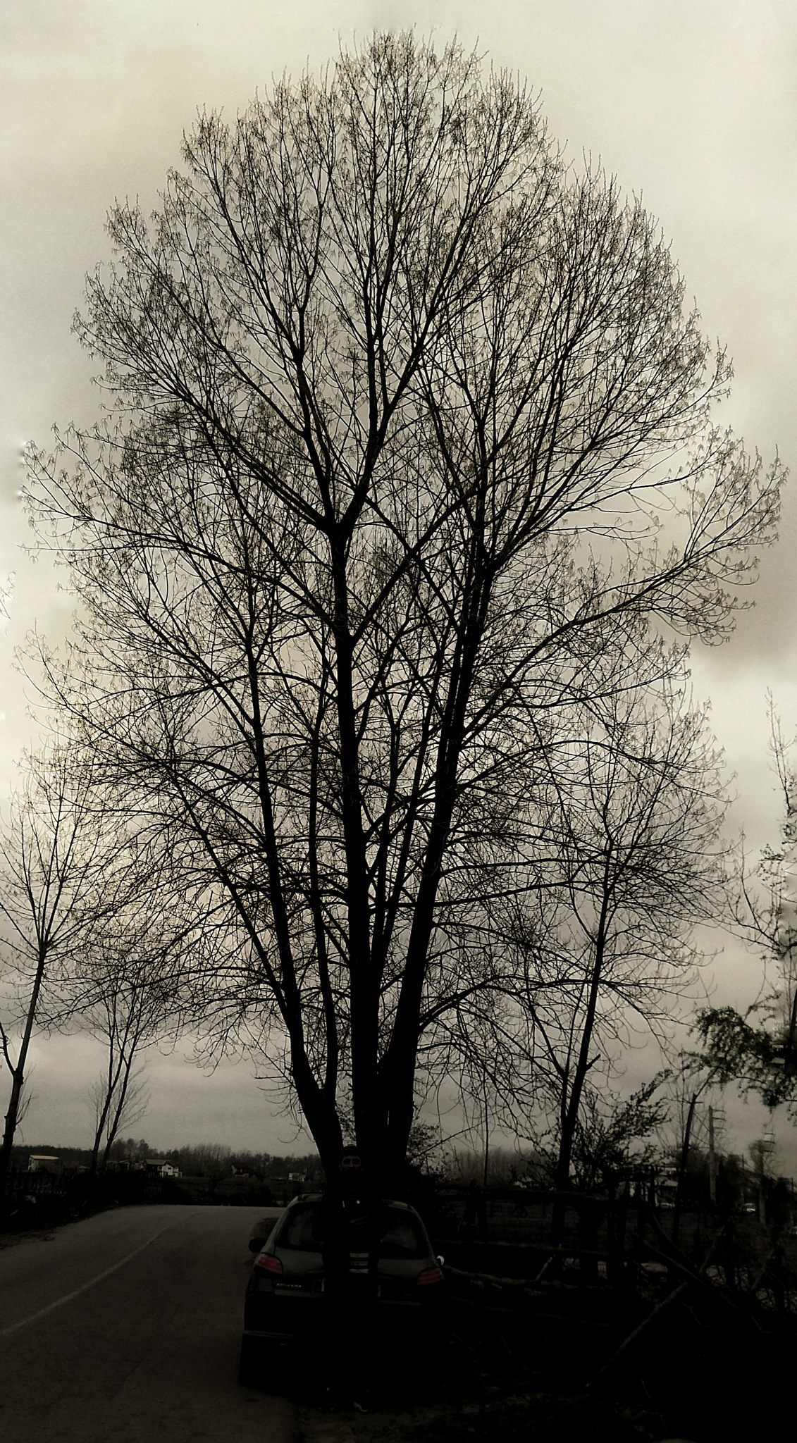 Photo in Travel #trees #tree #travel #life #road #shot #dark #story #cloudy #photography #photographer