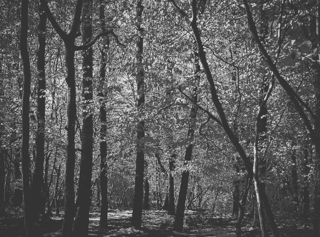 Photo in Travel #jungle #dark #trip #travel #trees #tree #black&white #shot #life #photography #photographer #story #fine art