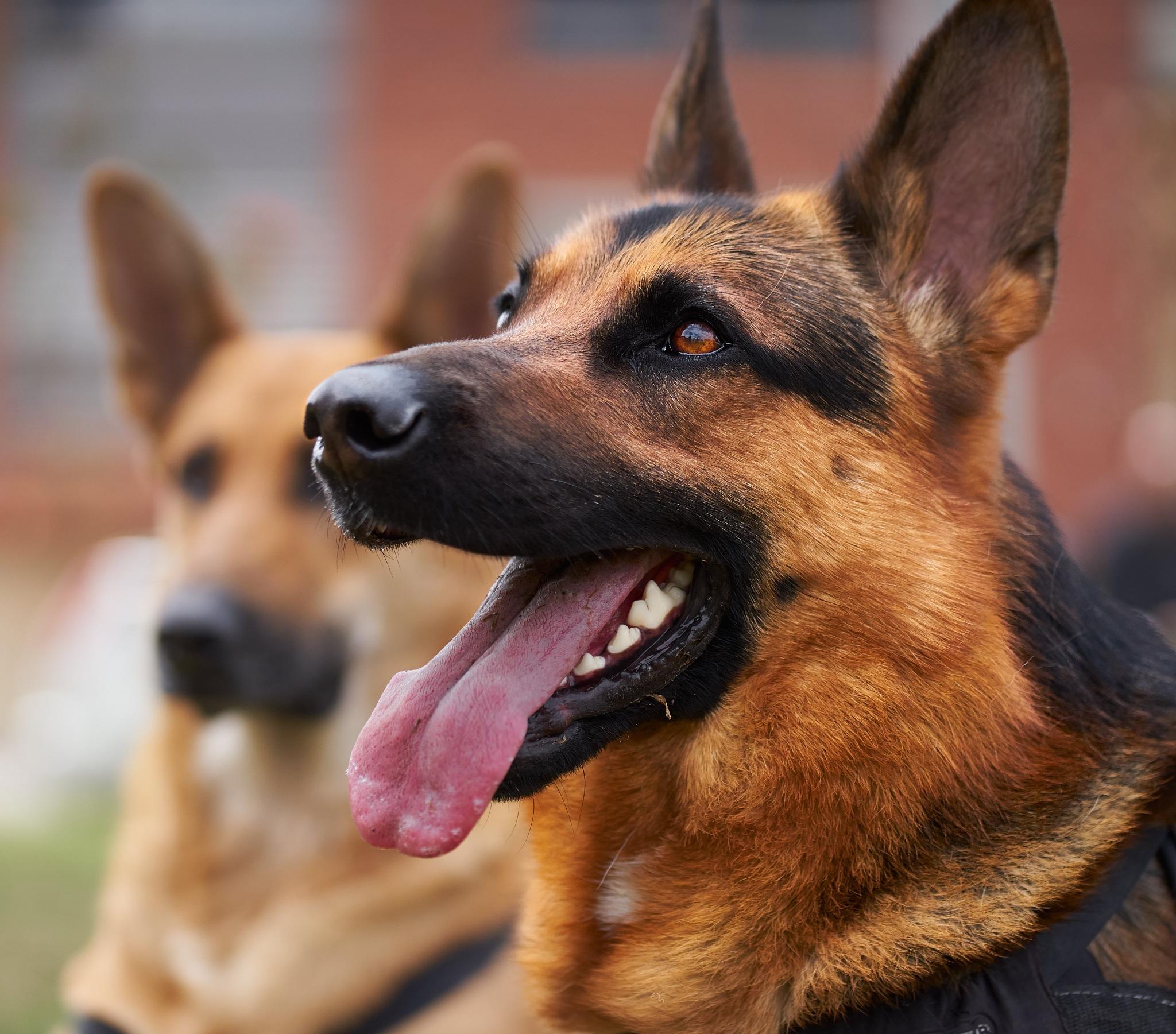 Photo in Animal #dog #canine #close up #park #domestic animal #animal theme