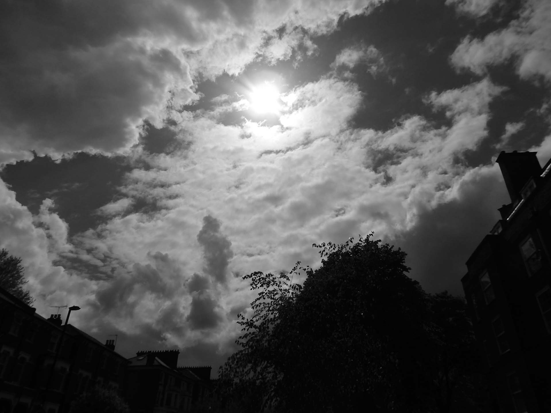 Photo in Black and White #sky #trees #sun #buildings #monochrome #clouds #nature #urban #street photography