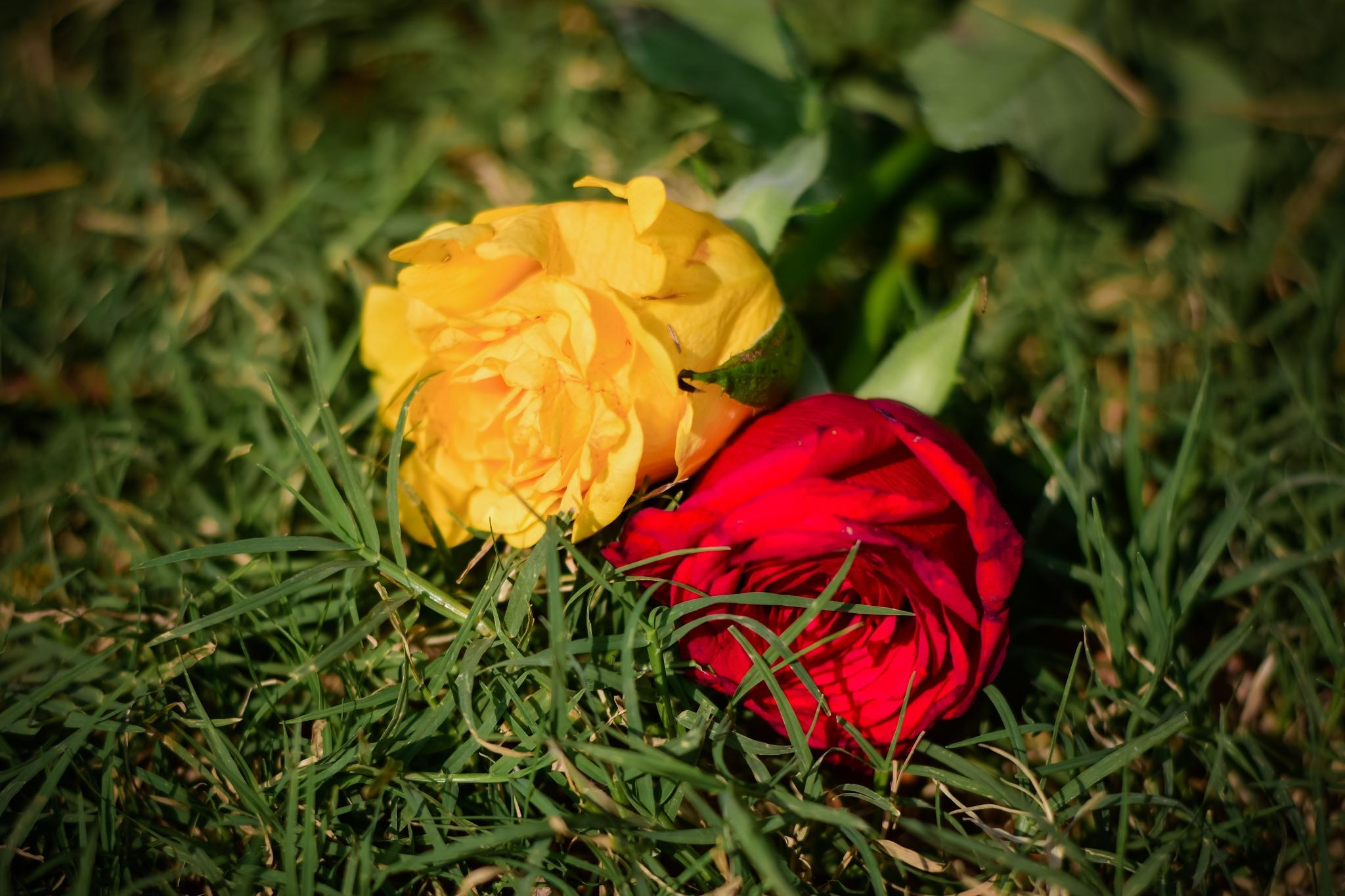 Valentine! by Fazla Rabbi Chowdhury Mridul