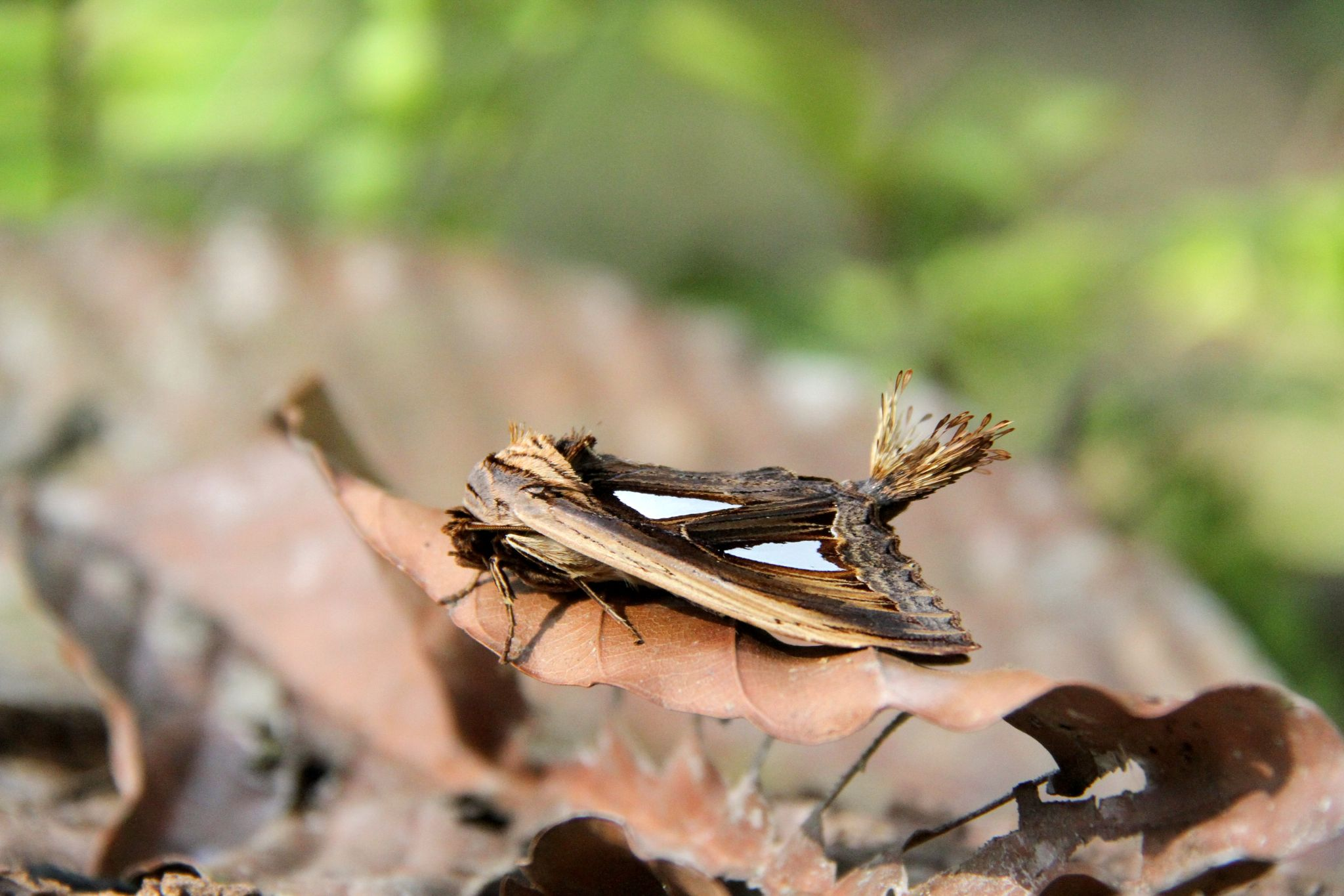 Moth in the Jungle by bobhartleyb